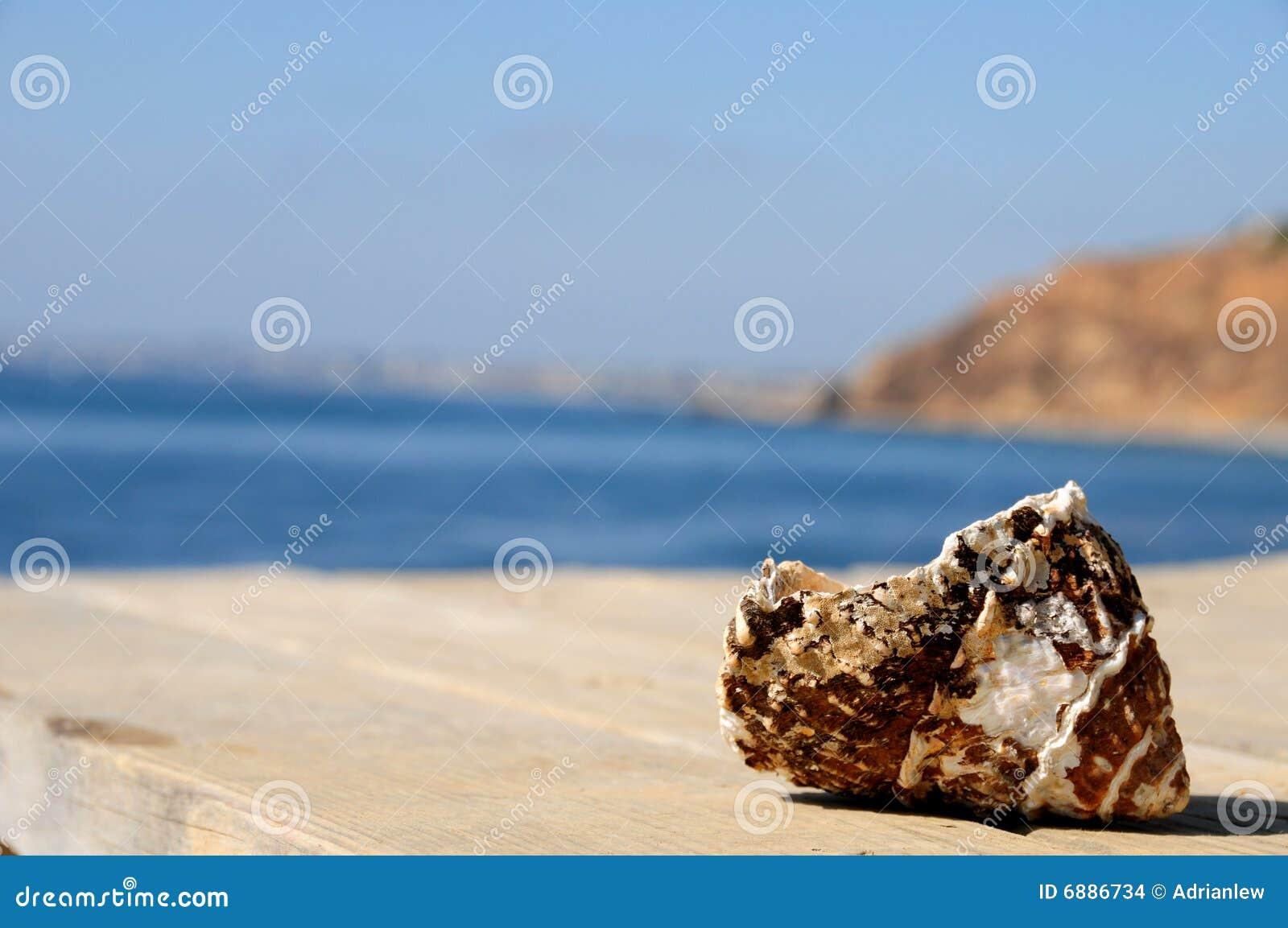 повреждено около раковины океана