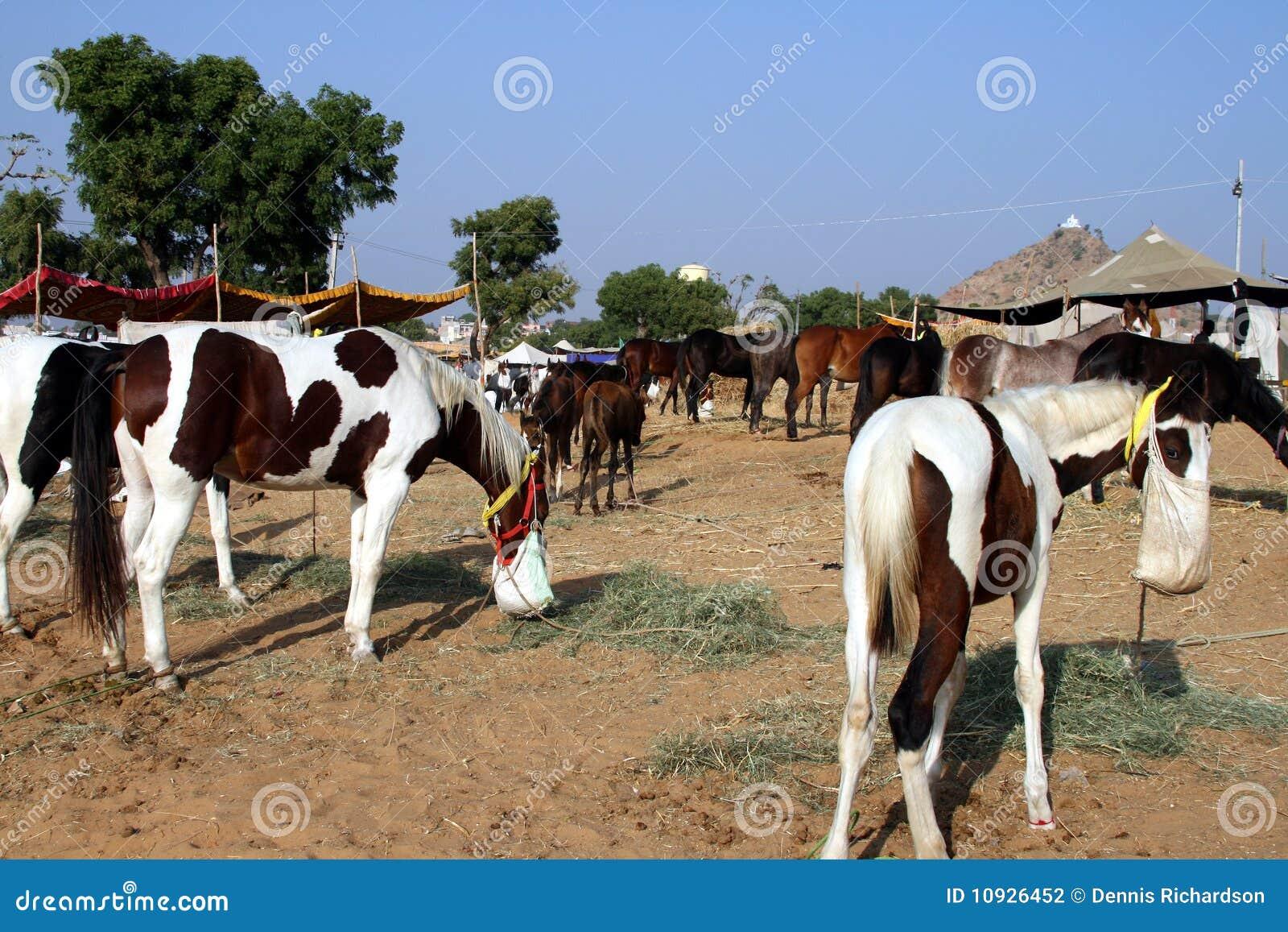 подавая лошади Индия
