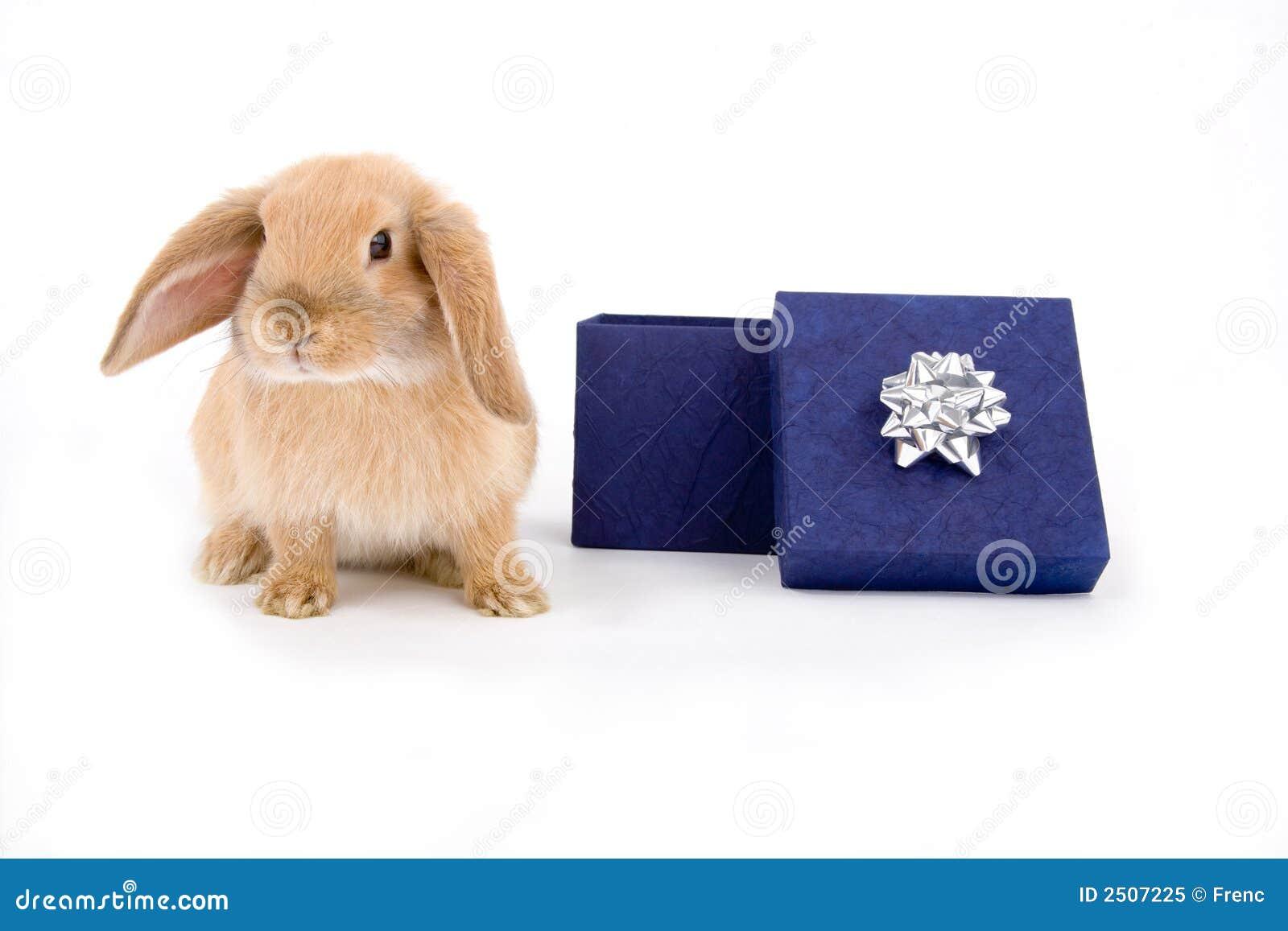 подарок зайчика коробки