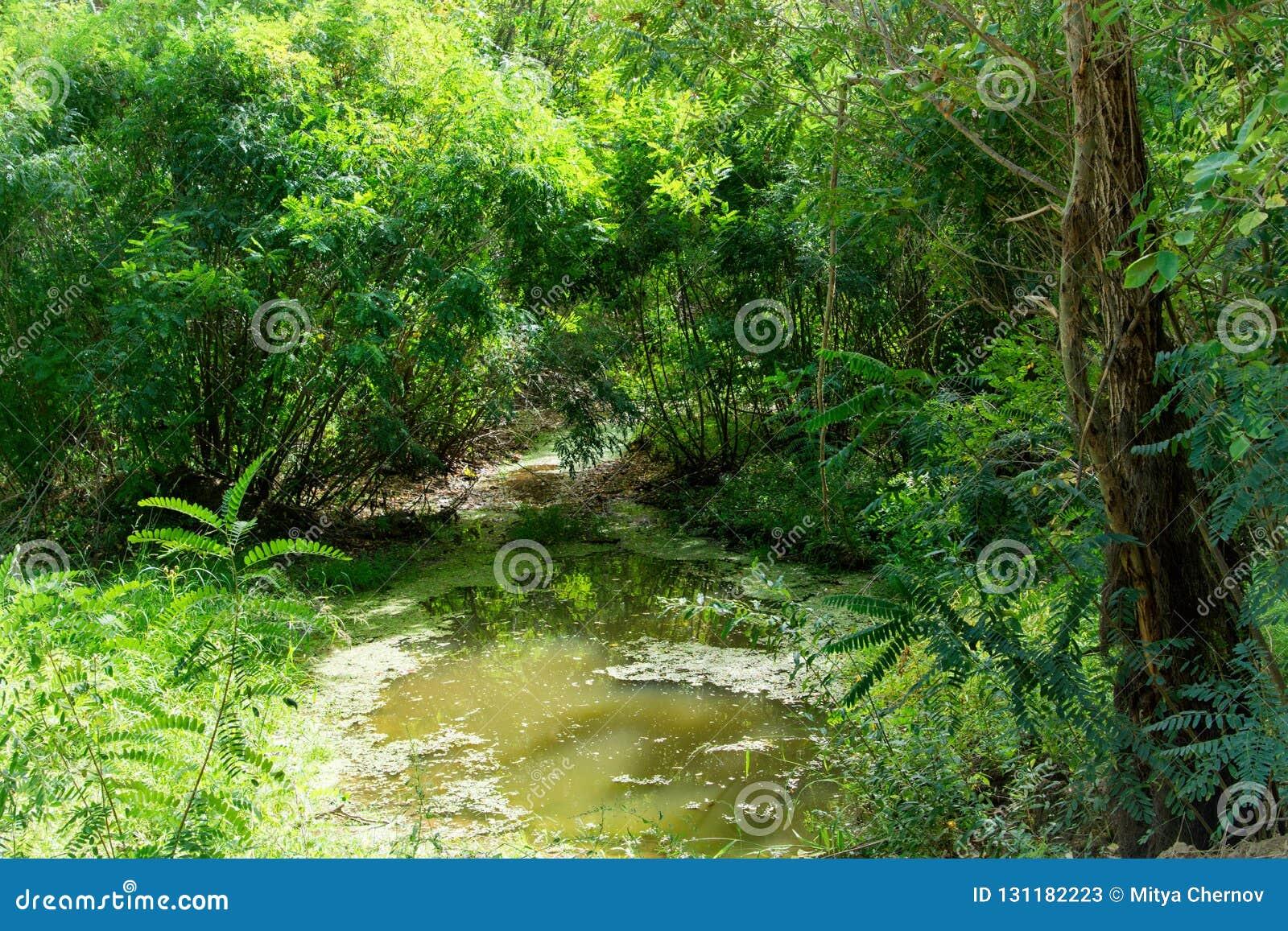 Подачи красивые потока через толстый, перерастанный лес