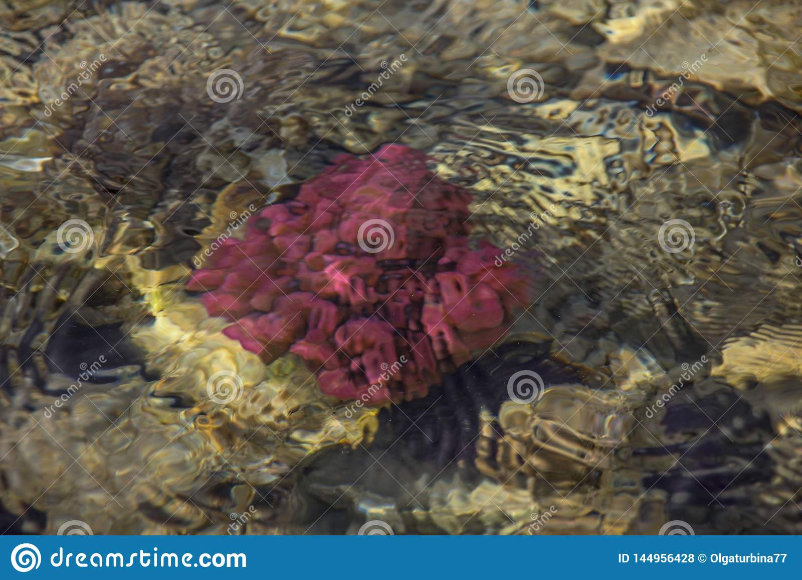Красочная подводная жизнь Подводная абстрактная текстура
