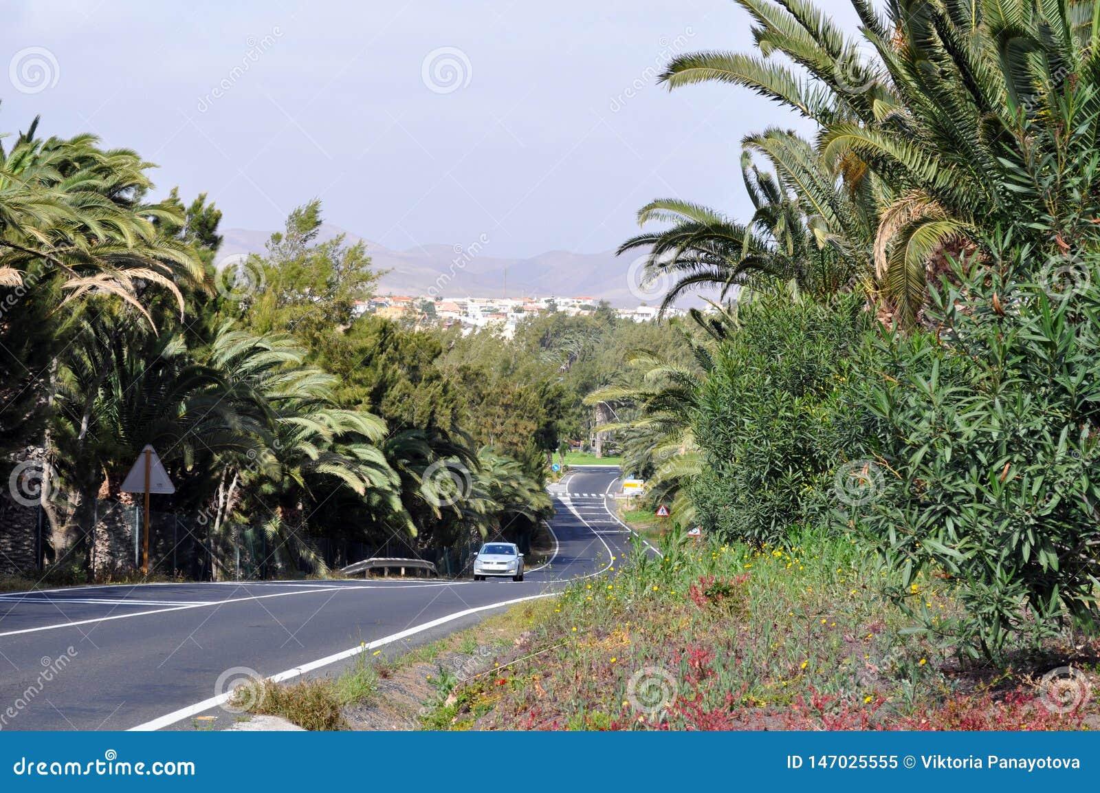 Подгоняя ринв дороги palmtrees
