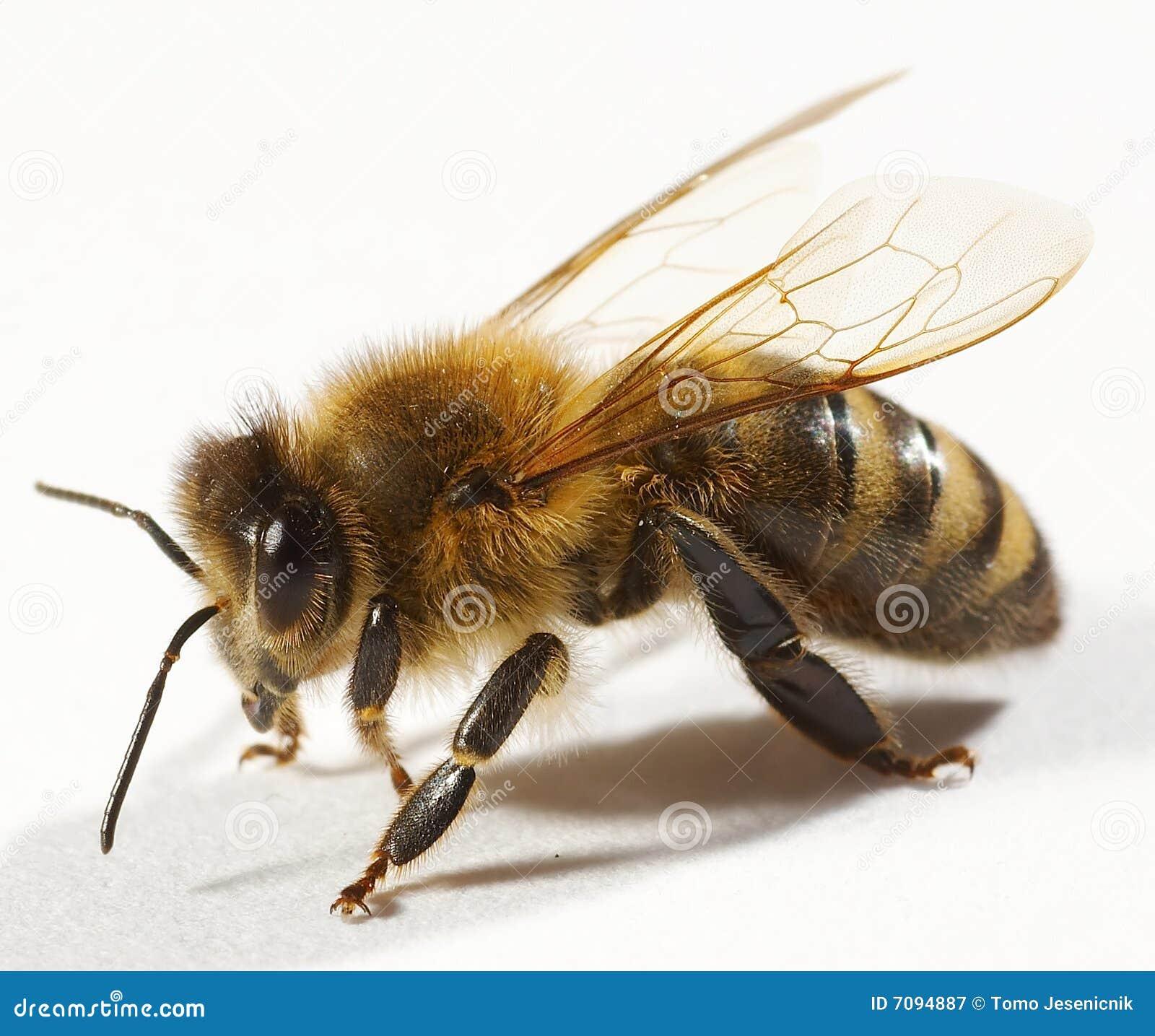 поднимающее вверх пчелы близкое