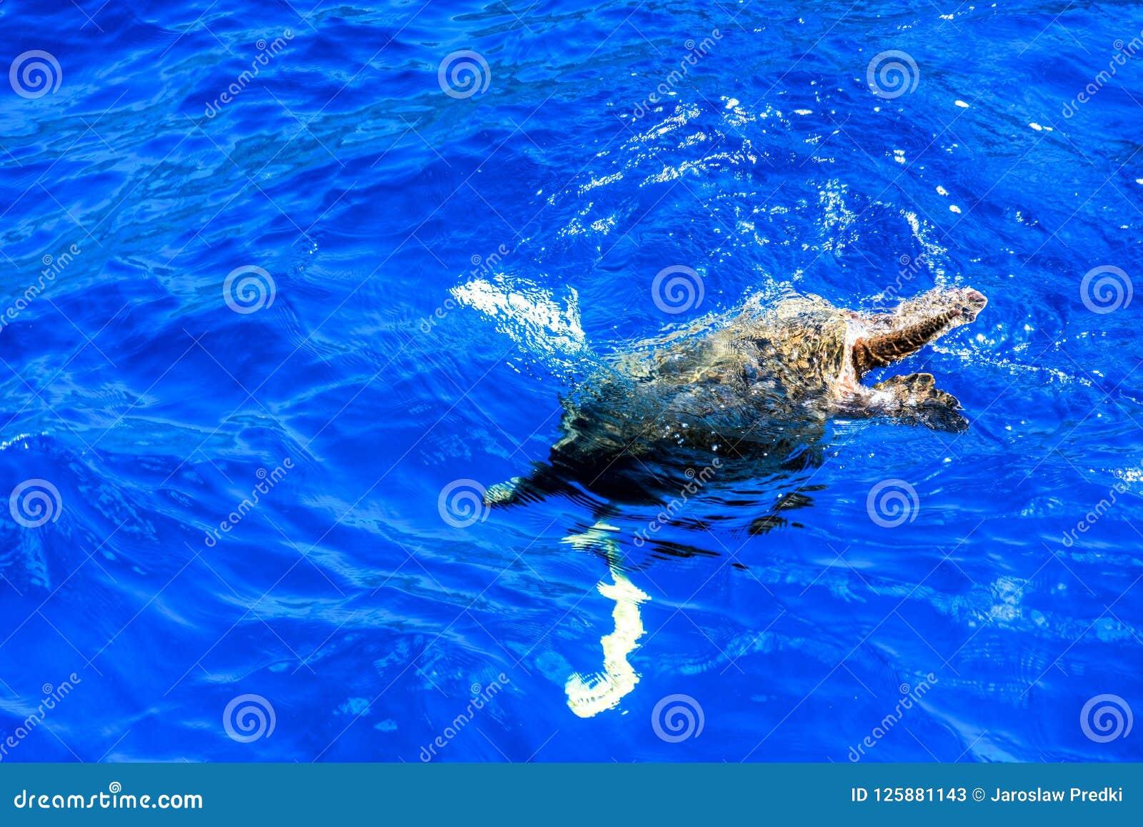 Подныривание Honu в Тихий Океан