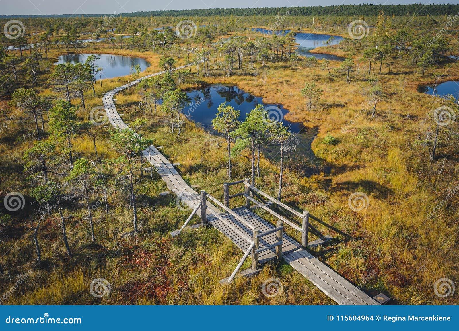 Поднятая трясина Променад в национальном парке Kemeri