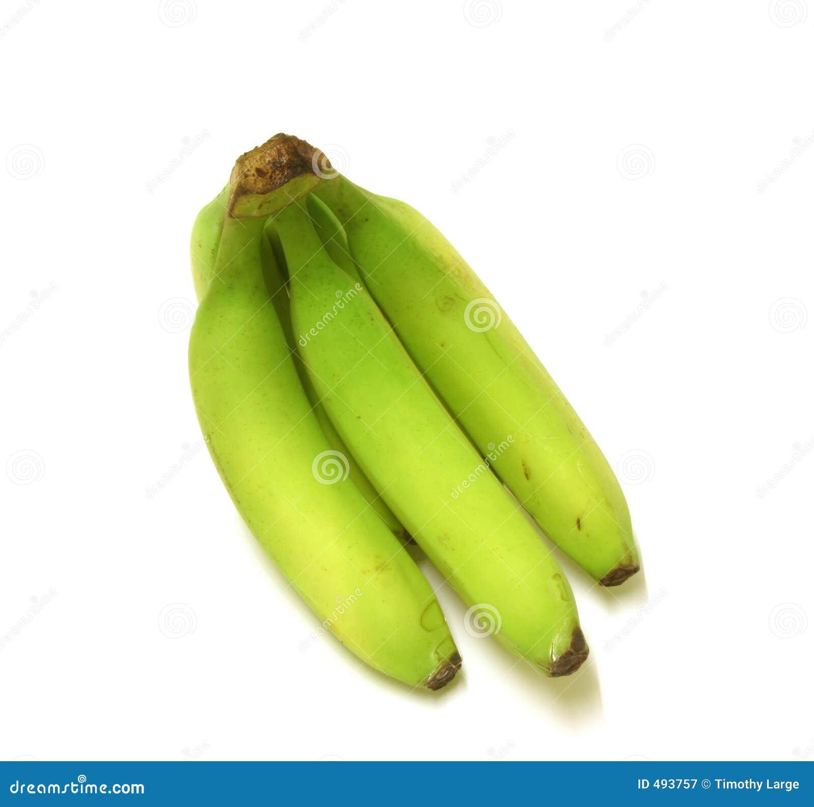 подорожник бананов зеленый
