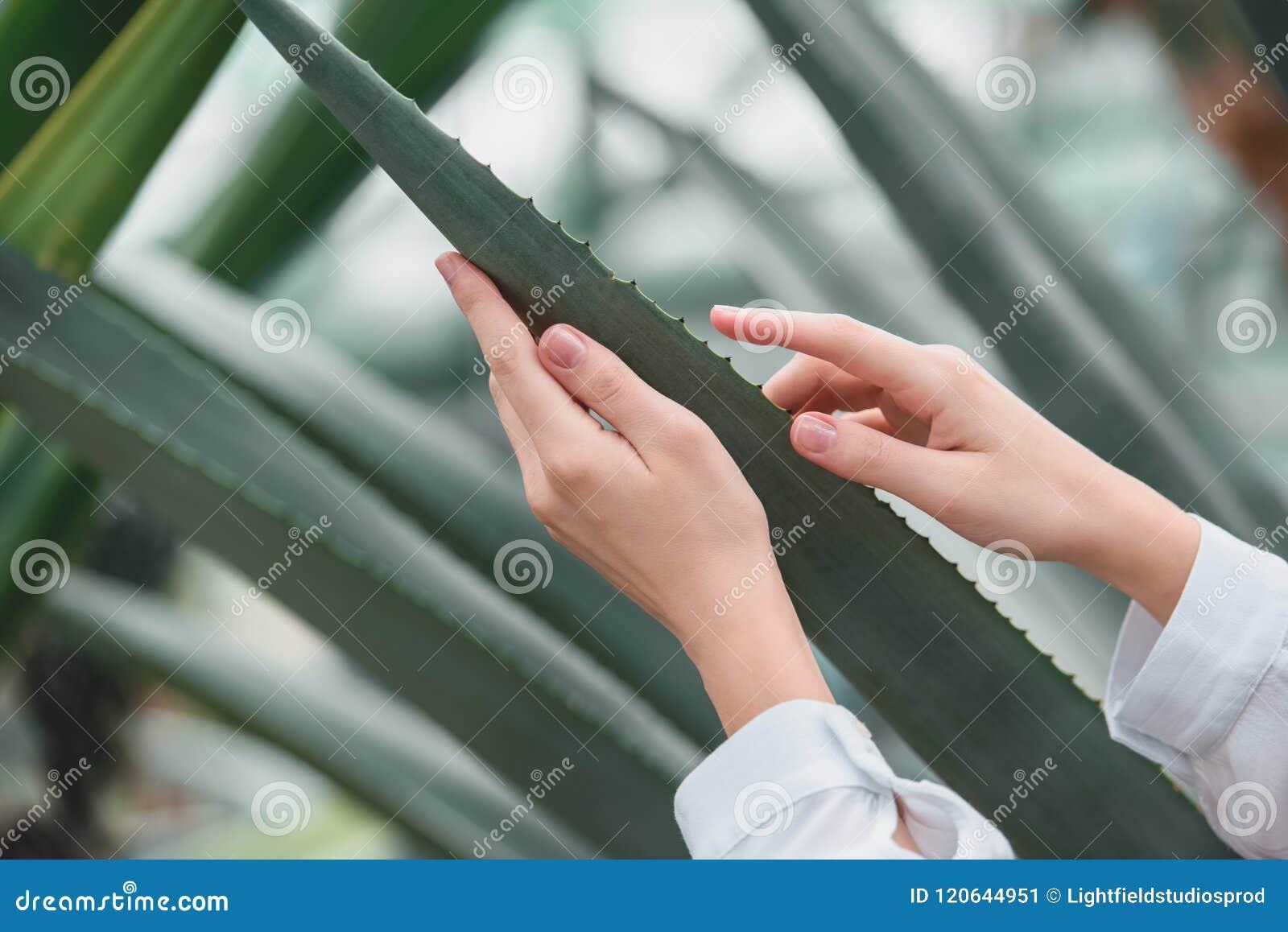 подрезанный взгляд нежных женских рук