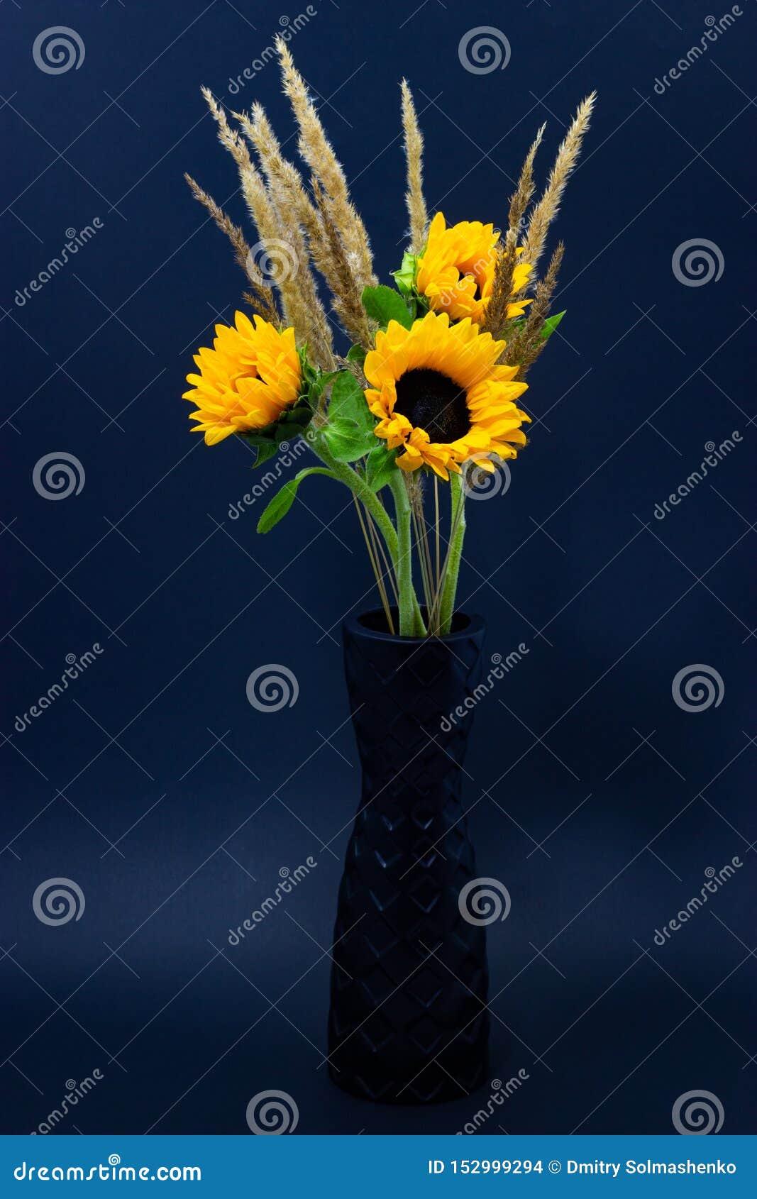 Подсолнечник, яркие желтые солнцецветы с хлопьями в черной вазе на предпосылке темной предпосылки флористической