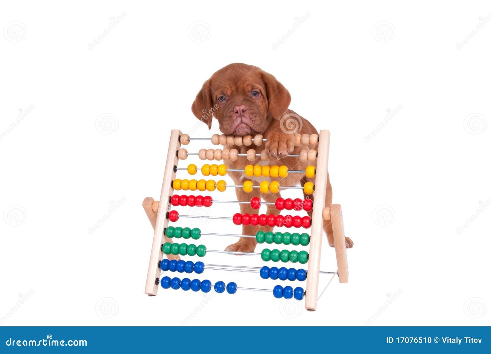 подсчитывать щенка