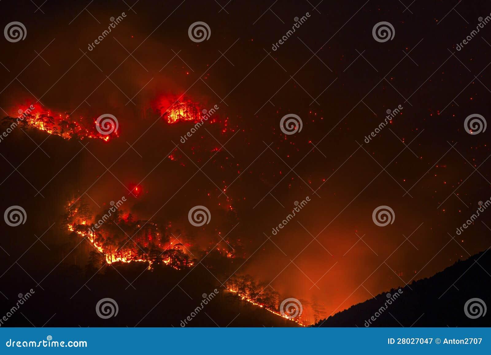 Пожар в пуще