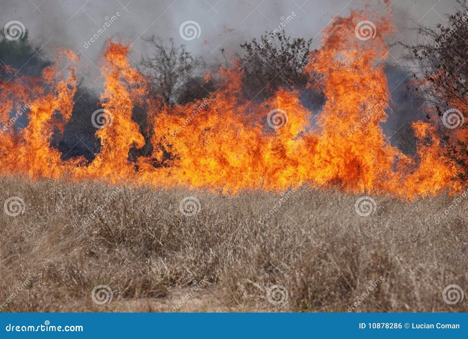 пожар bush
