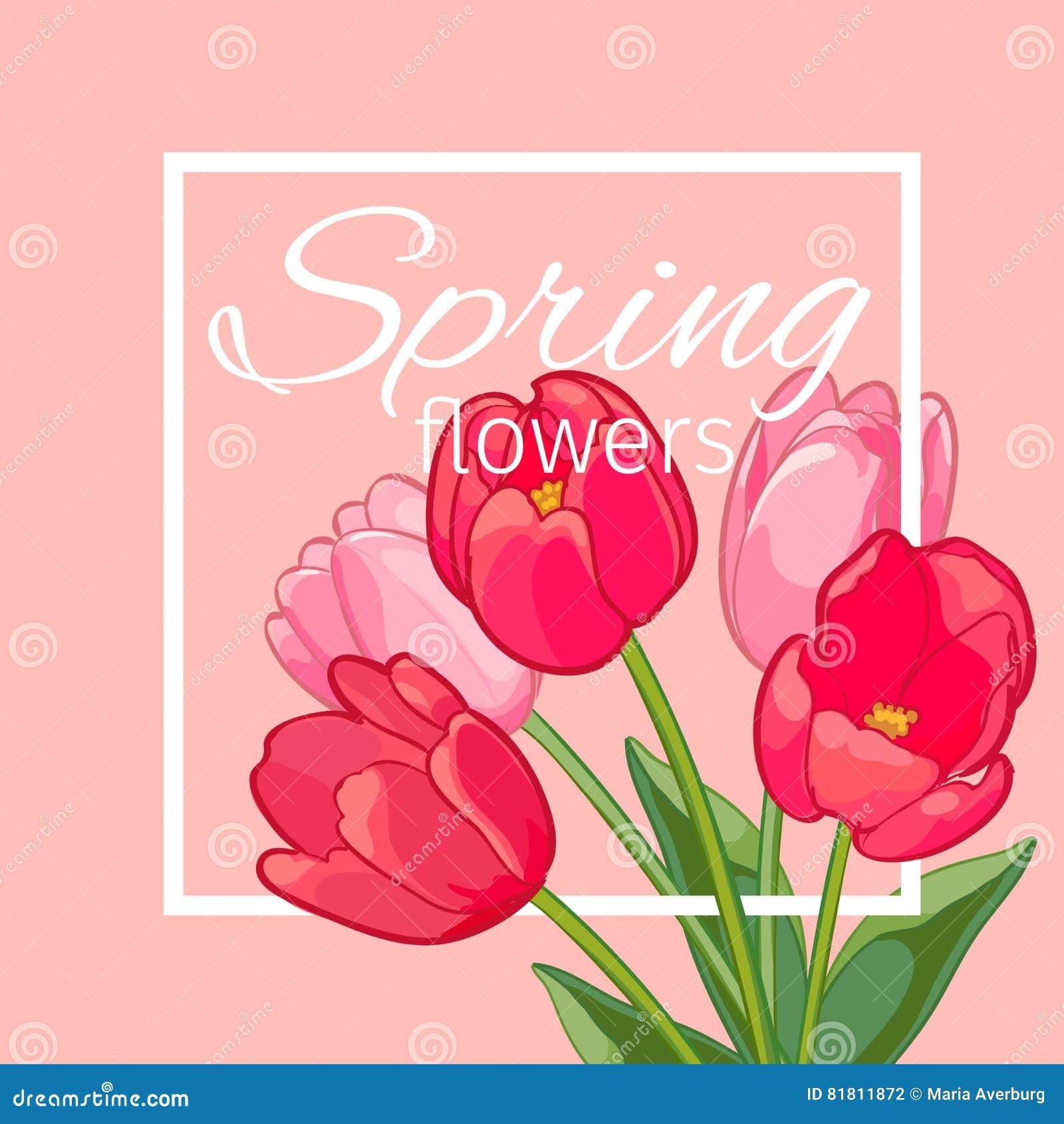 Поздравительная открытка с зацветая цветками тюльпана также вектор иллюстрации притяжки corel