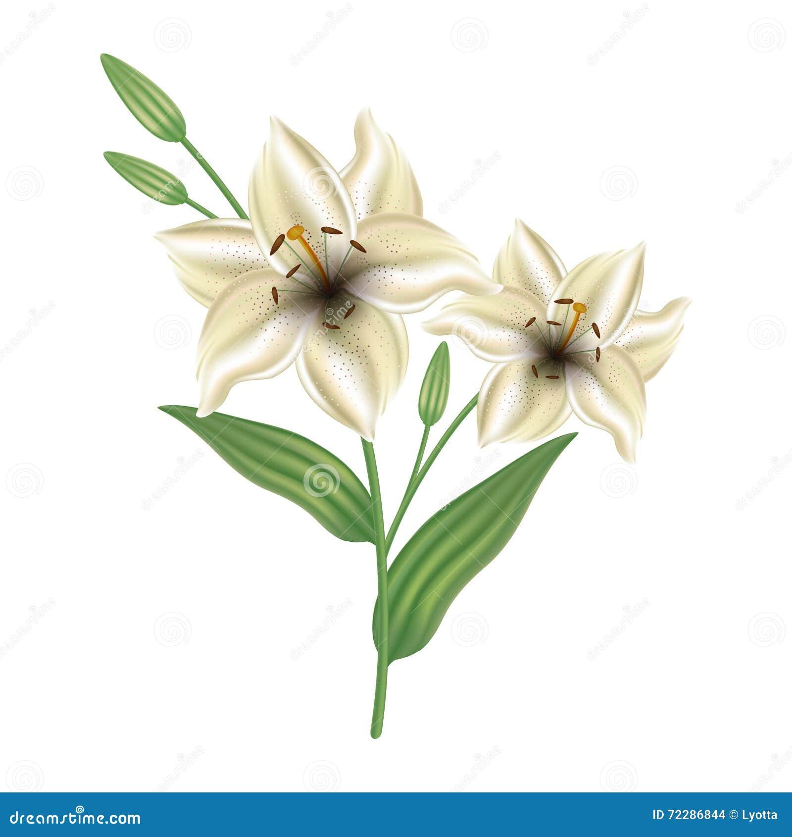 Download Поздравительная открытка с лилией цветков День матери карточки, день валентинки Иллюстрация вектора - иллюстрации насчитывающей украшено, borgia: 72286844