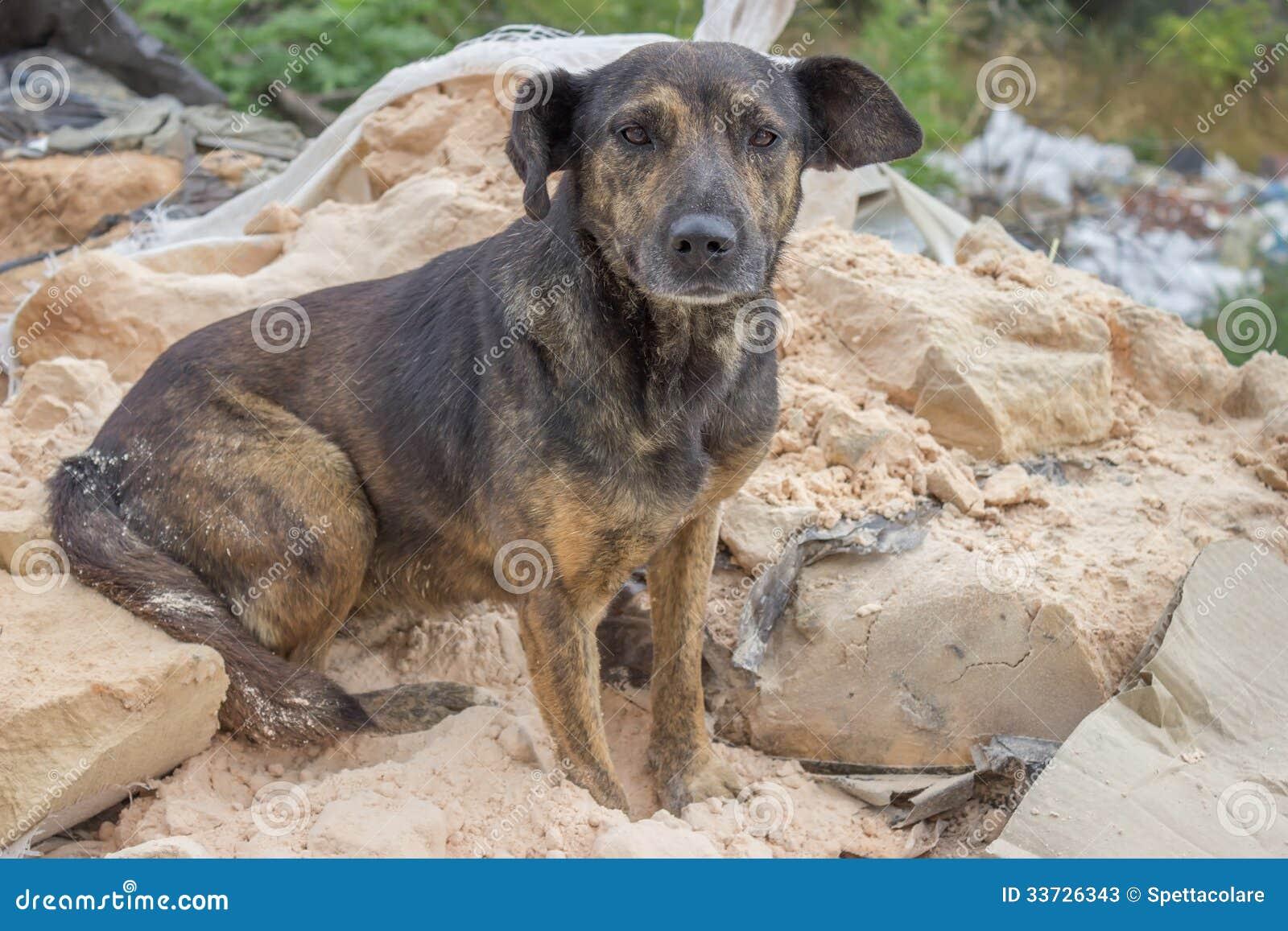 Покинутая собака 2