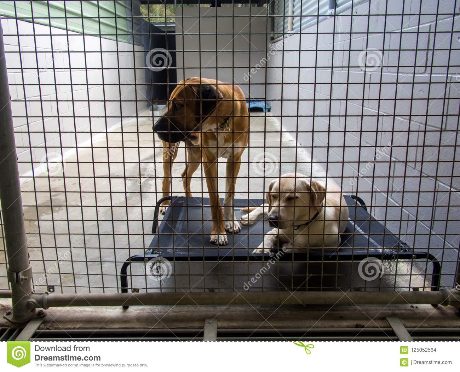 Покинутые собаки приюта для бездомных за решеткой на фунте