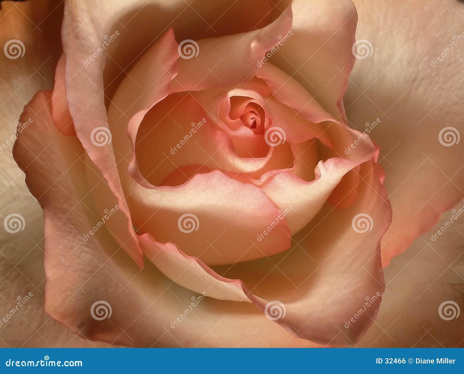 покраснейте розово