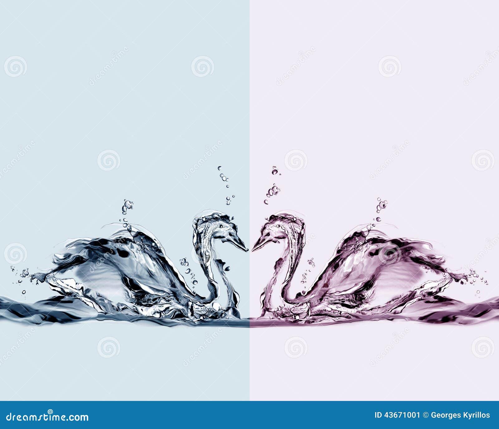 покрашенная вода лебедей влюбленности