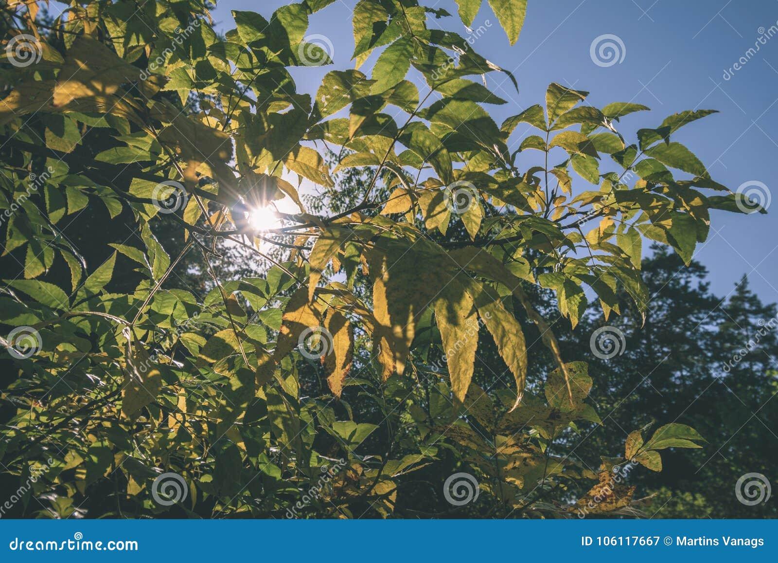 покрашенное золото осени выходит в яркий солнечный свет - винтажный ретро fi