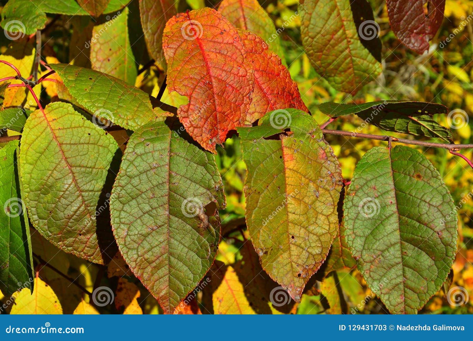 Покрашенные листья осени вишни птицы backhander