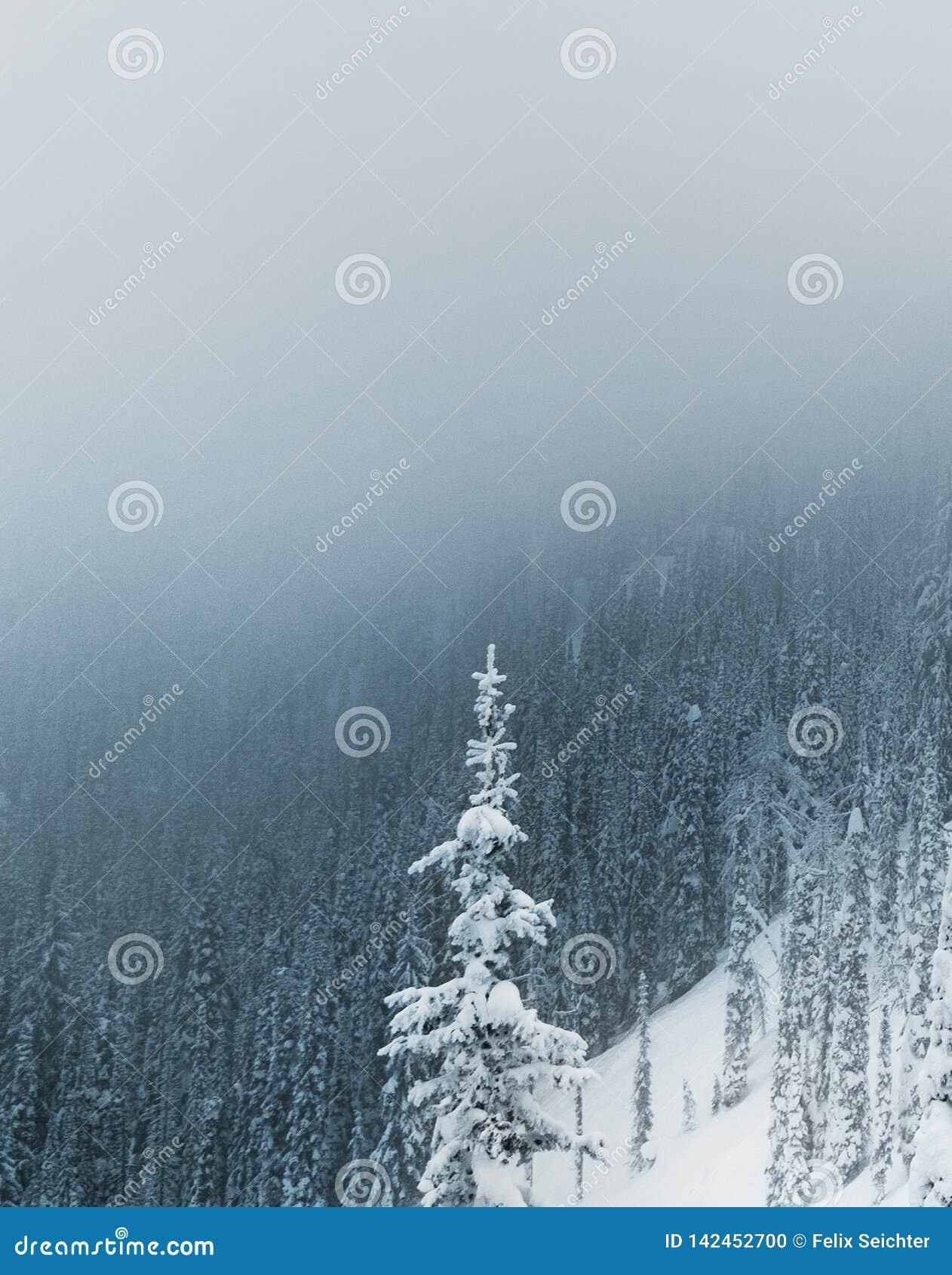 покрытые валы снежка гор горы дома hoarfrost