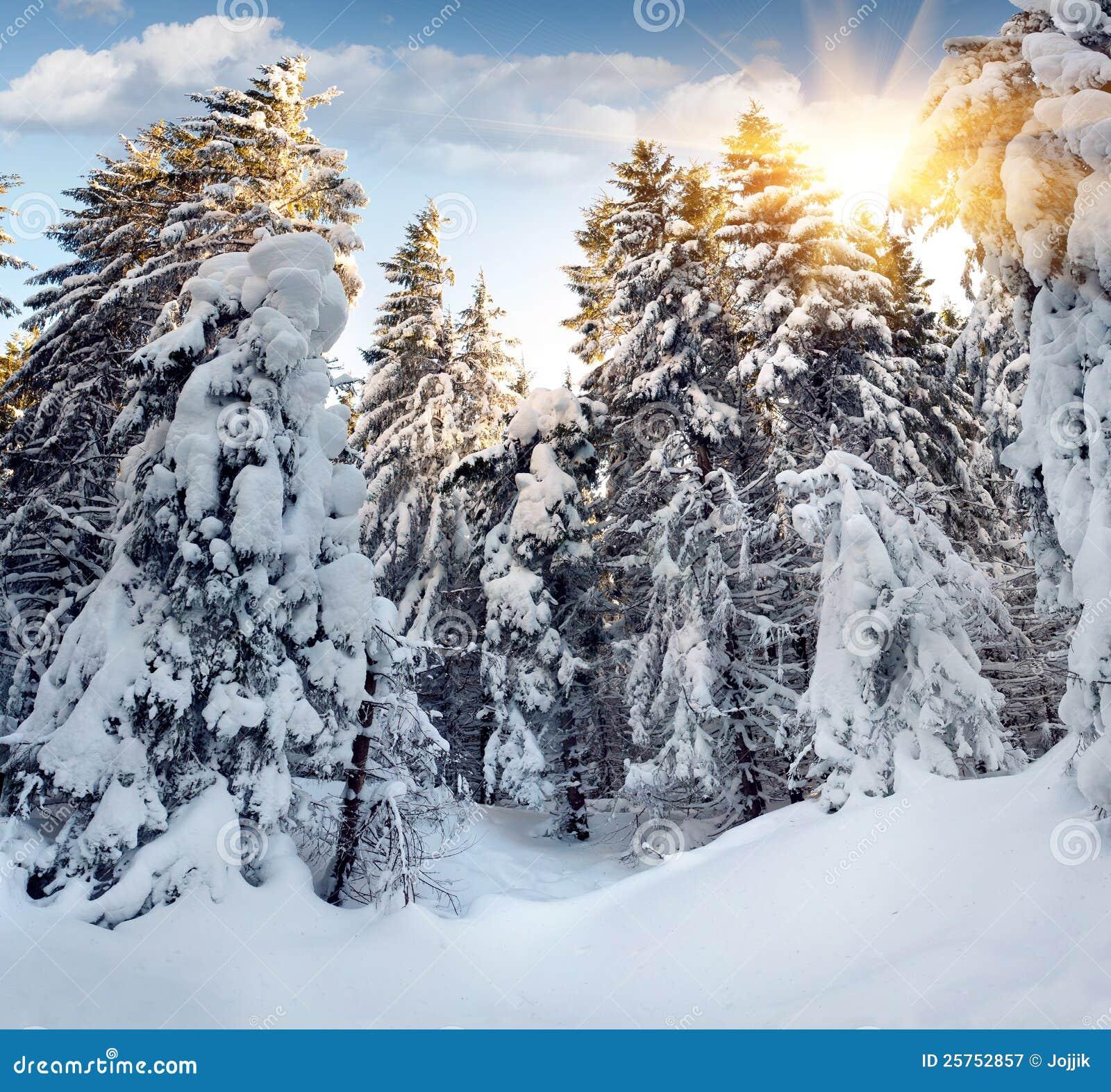 покрытые валы снежка hoarfrost