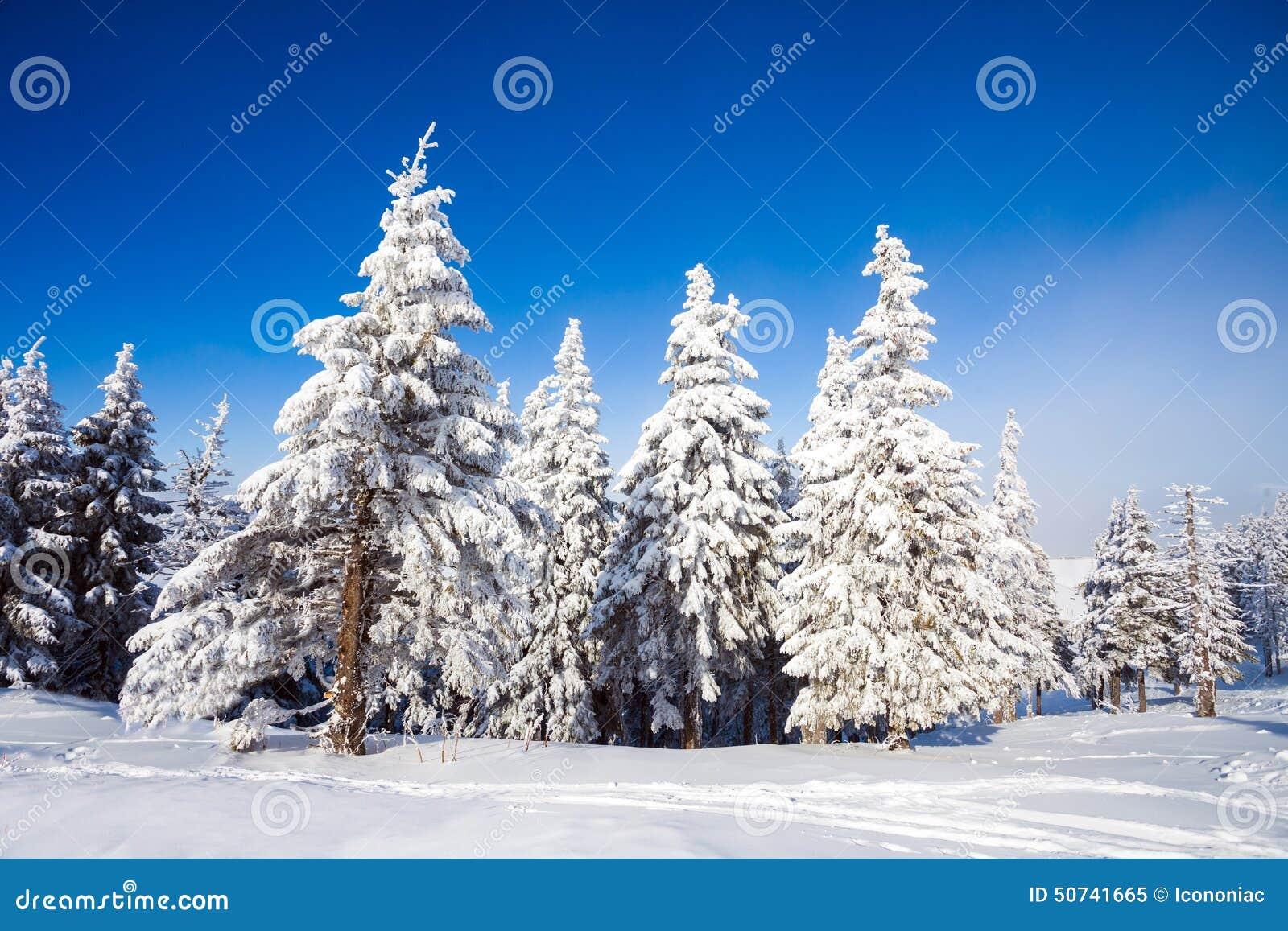 покрытые валы снежка сосенки