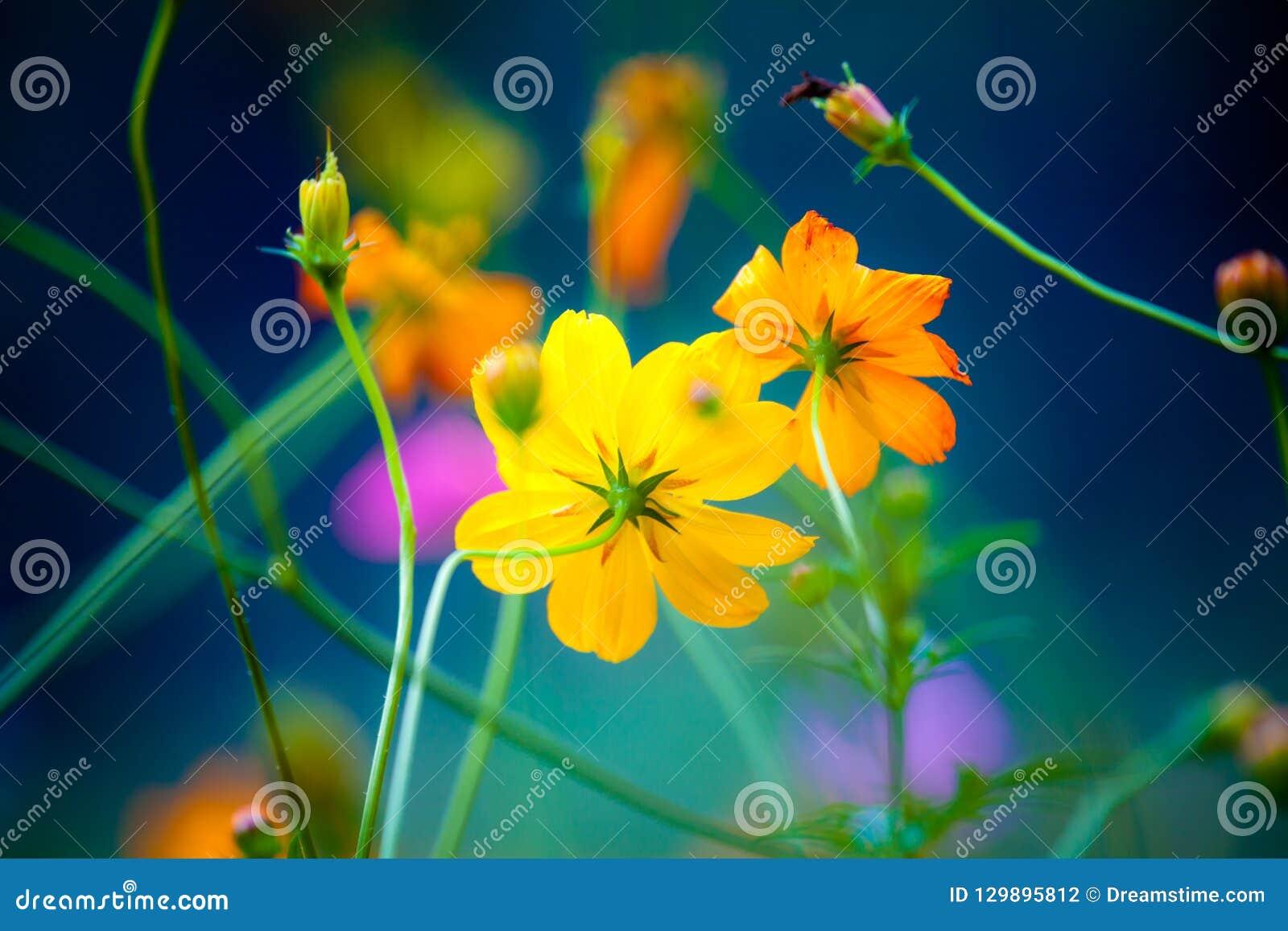 Полевые цветки в Yangshuo Китае