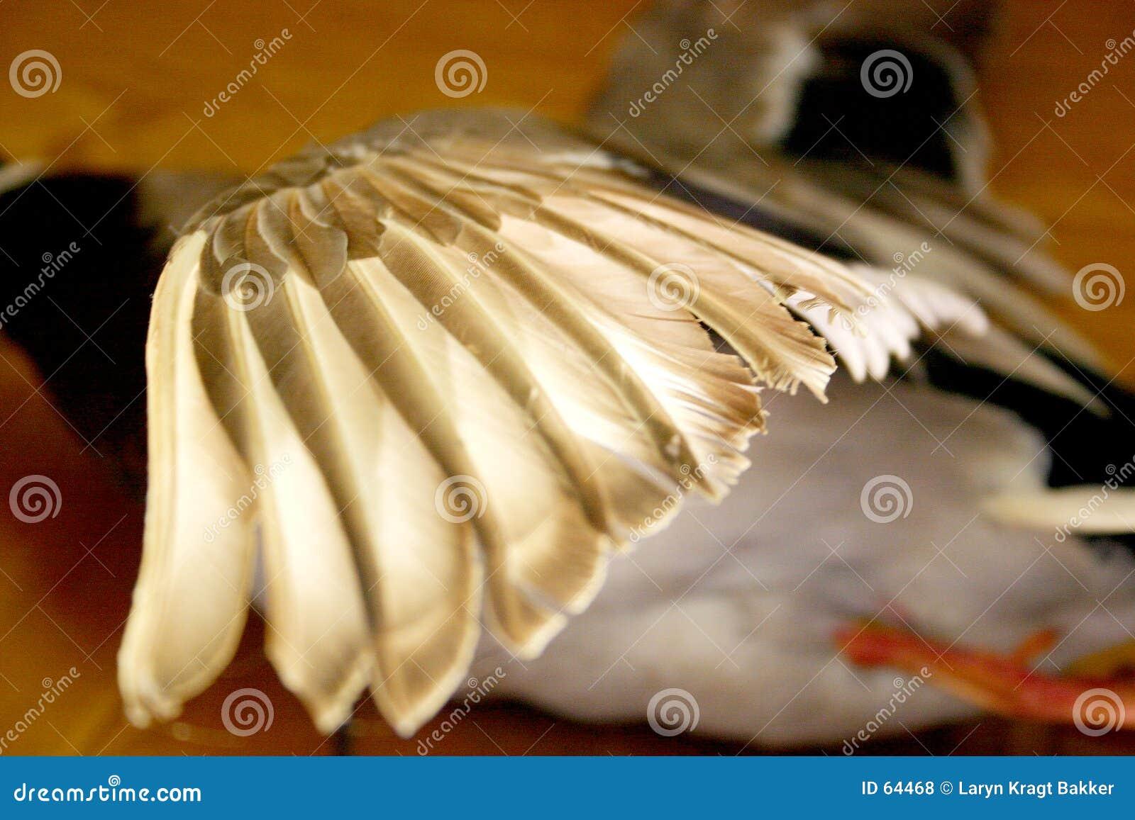 полет утки