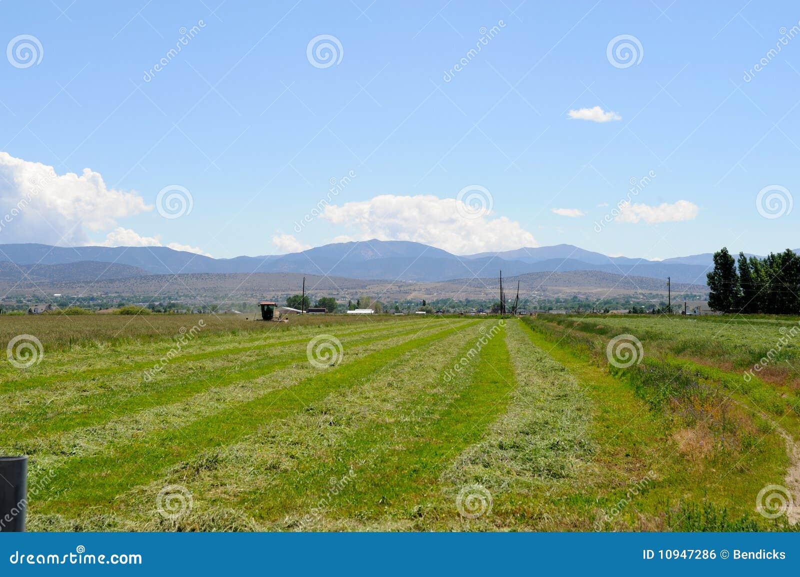 поле пустыни альфальфы