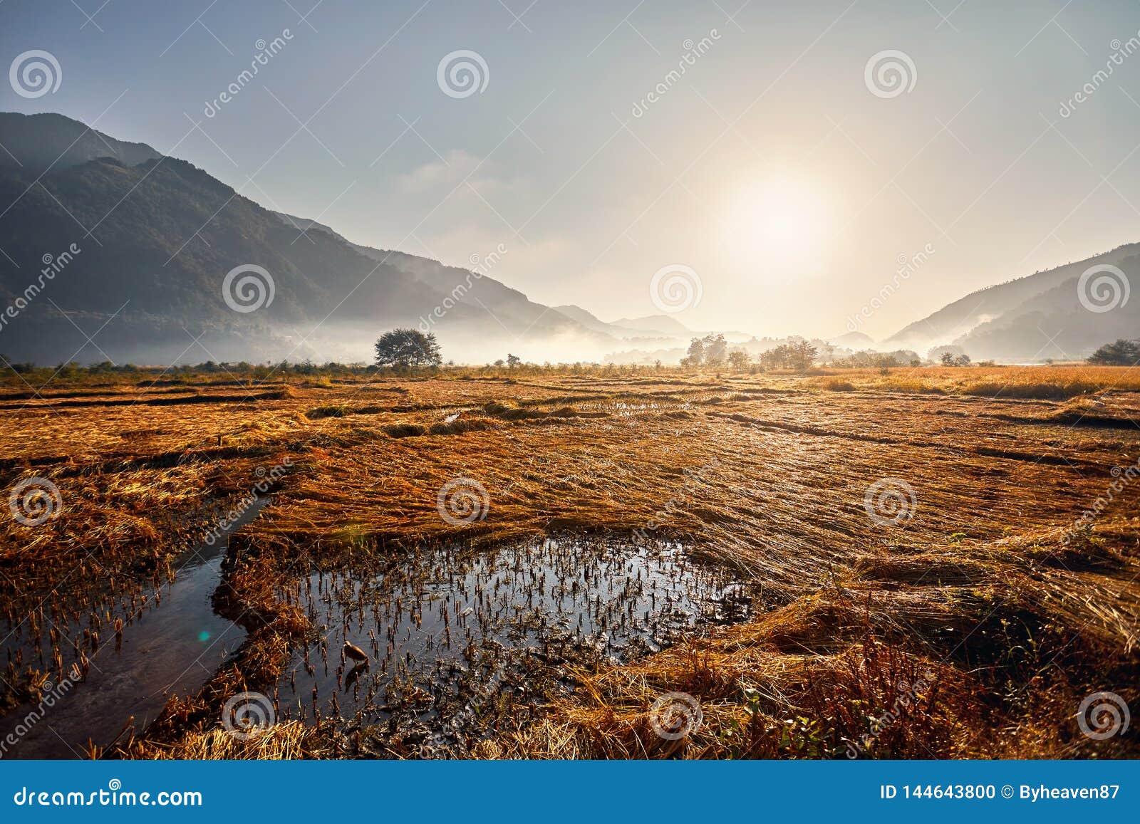 Поле риса в деревне непальца
