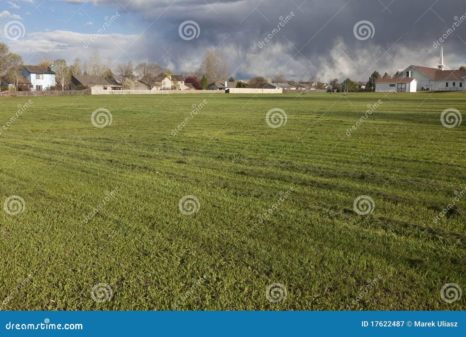 поле свеже засевает травой накошено