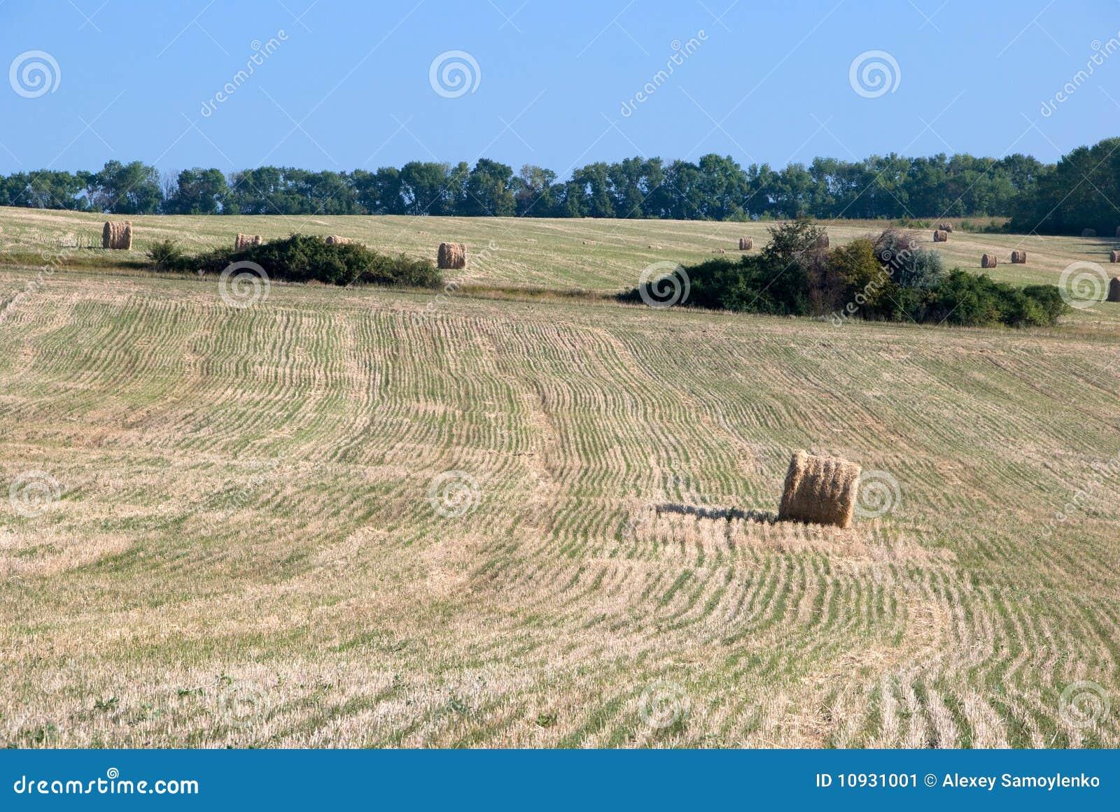поле сжало пшеницу Украины