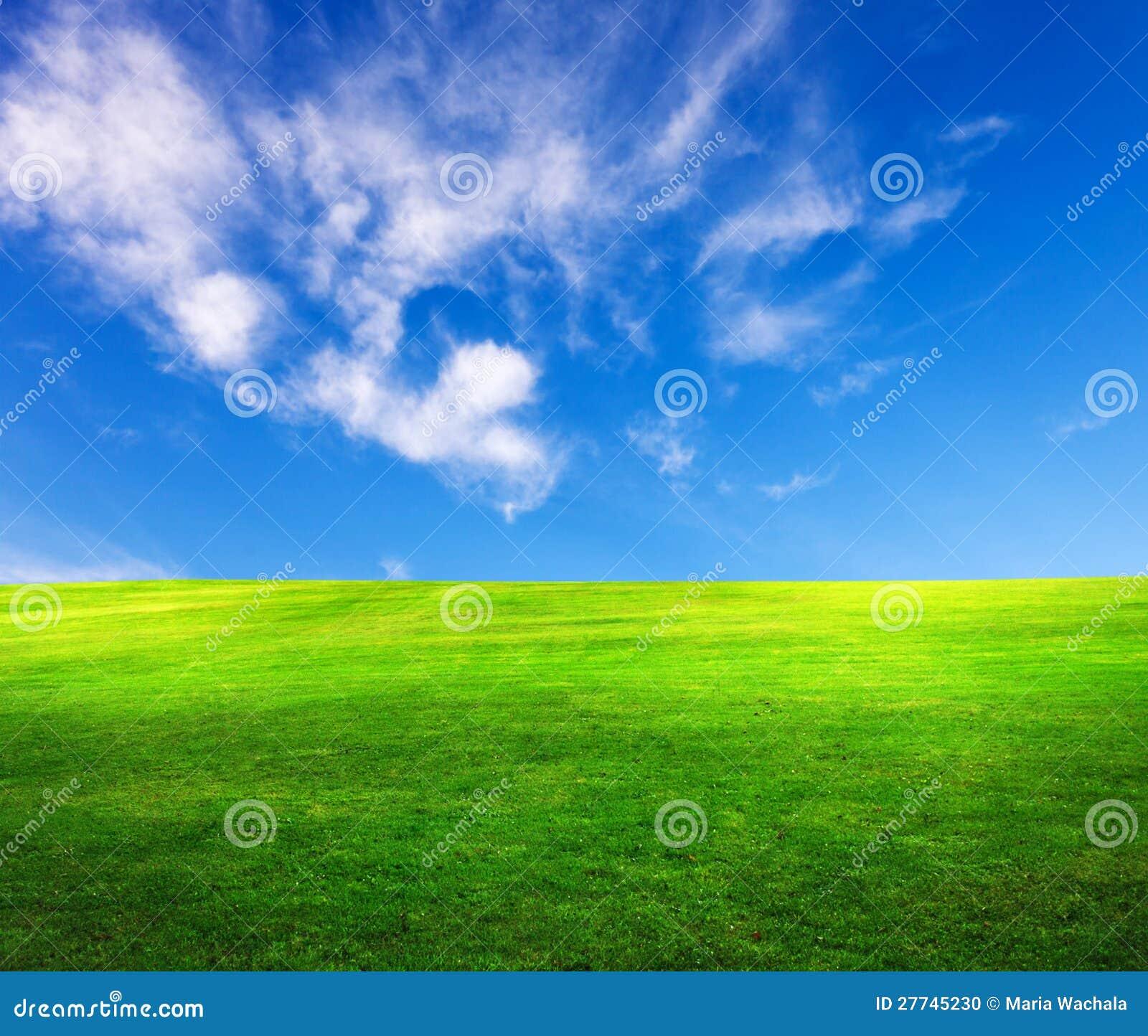 Поле травы