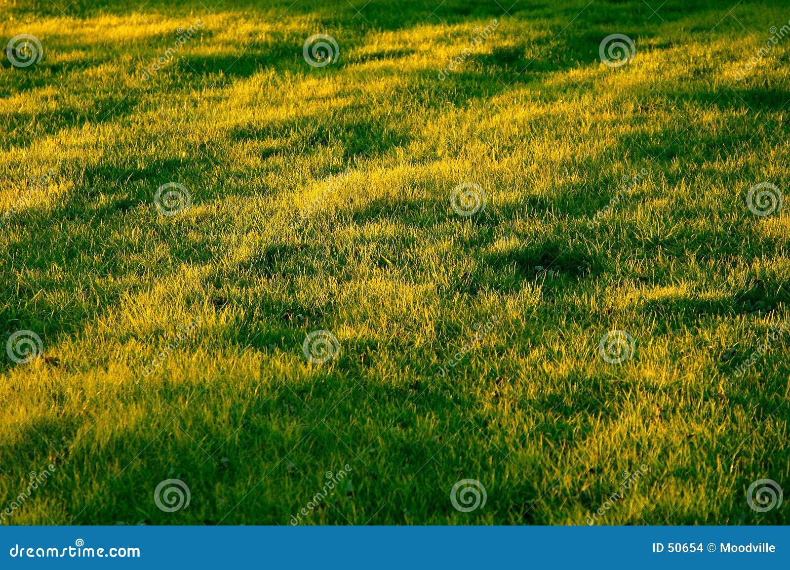 поле травянистое