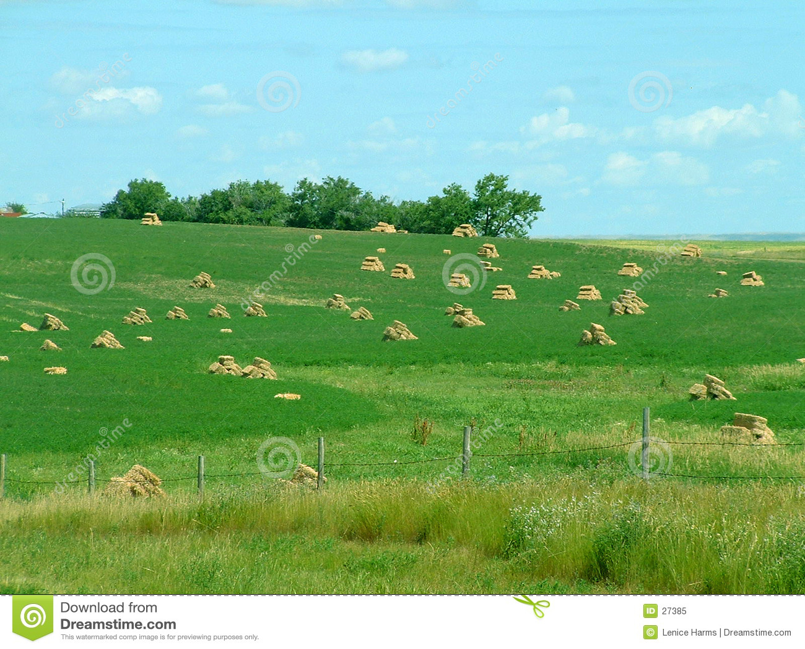 поле bales