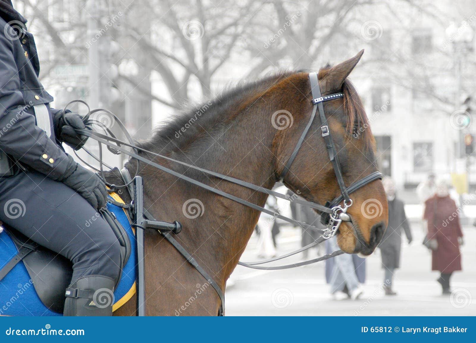 полисмен horseback