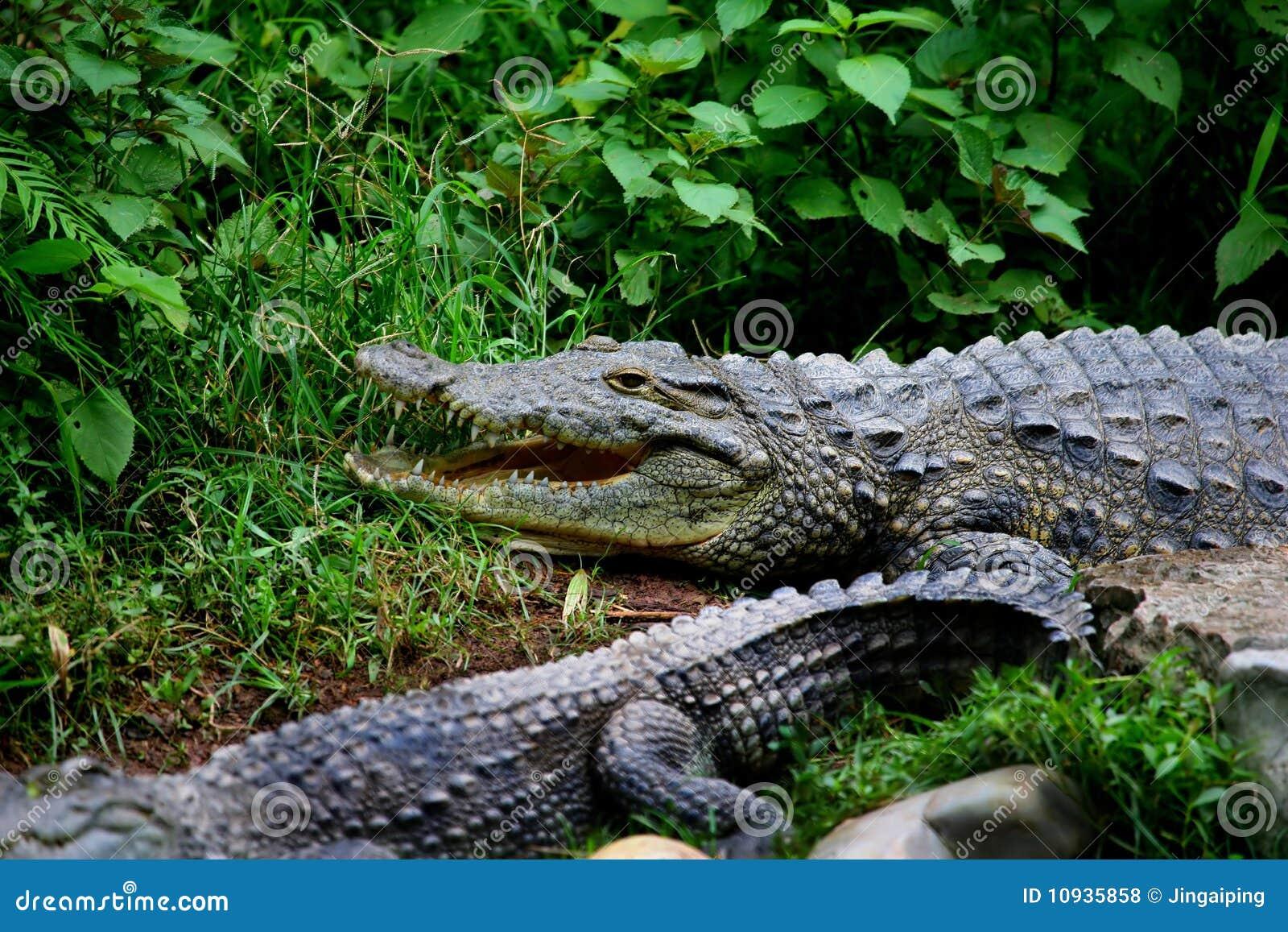 полностью разбивочный крокодил chongqing муниципальный