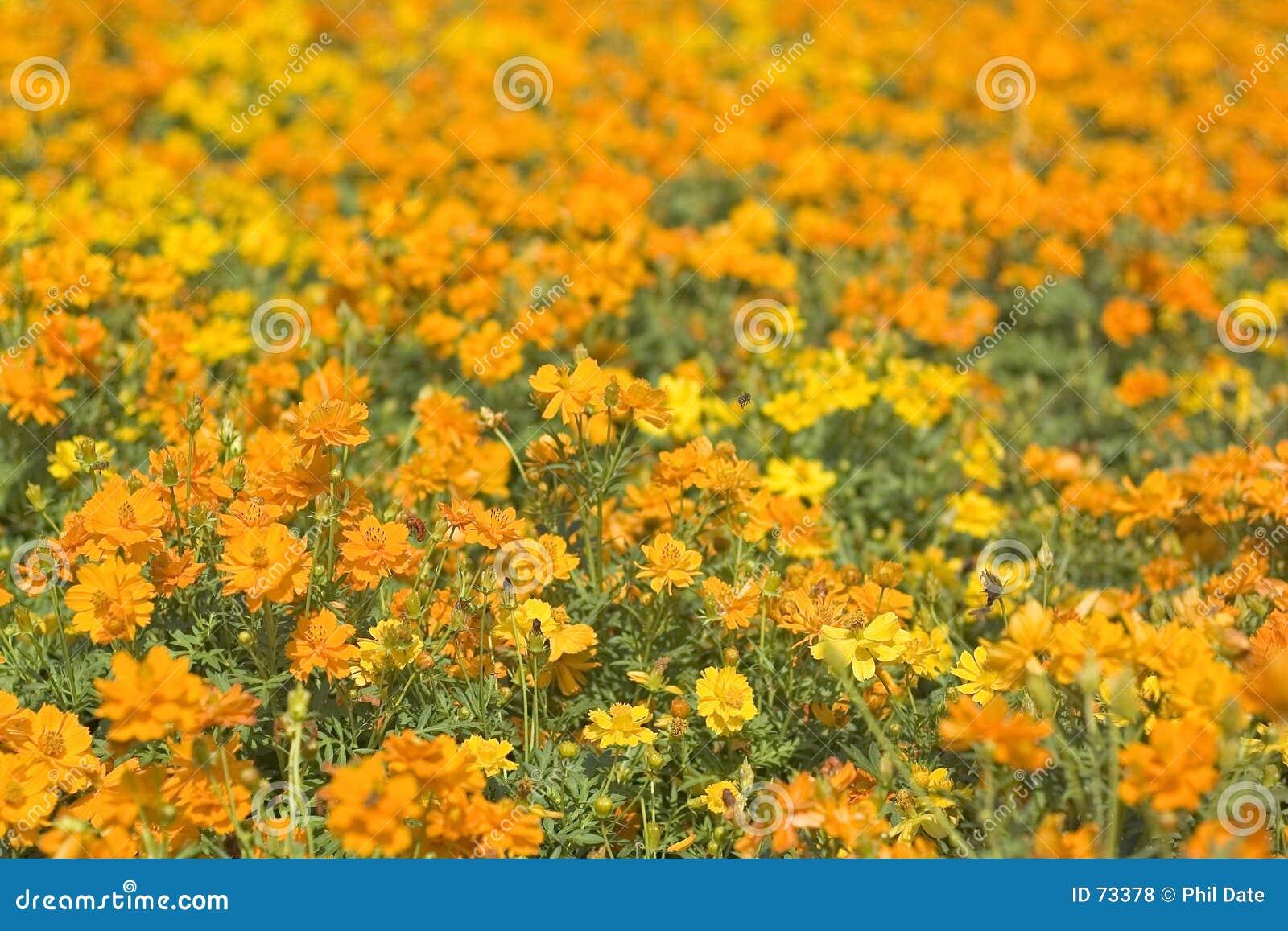 помеец 2 flowerbed