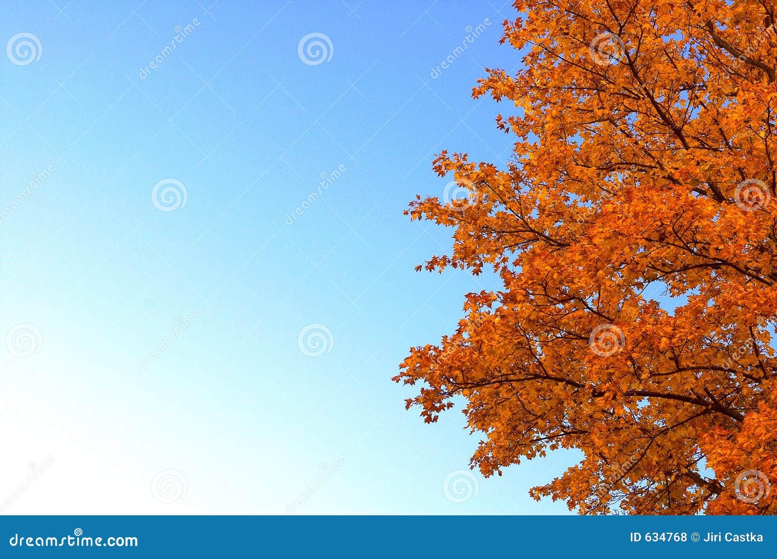 Download померанцовый вал стоковое фото. изображение насчитывающей цвет - 634768
