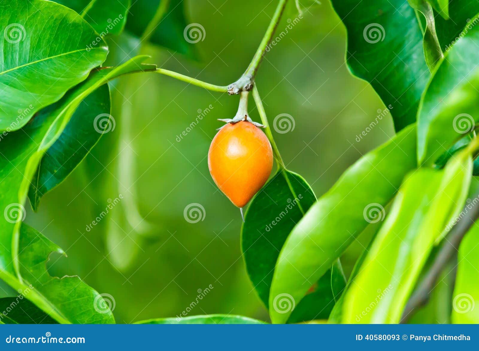Померанцовый плодоовощ