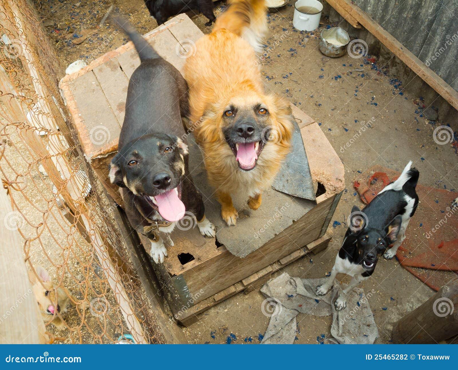 помехи собак