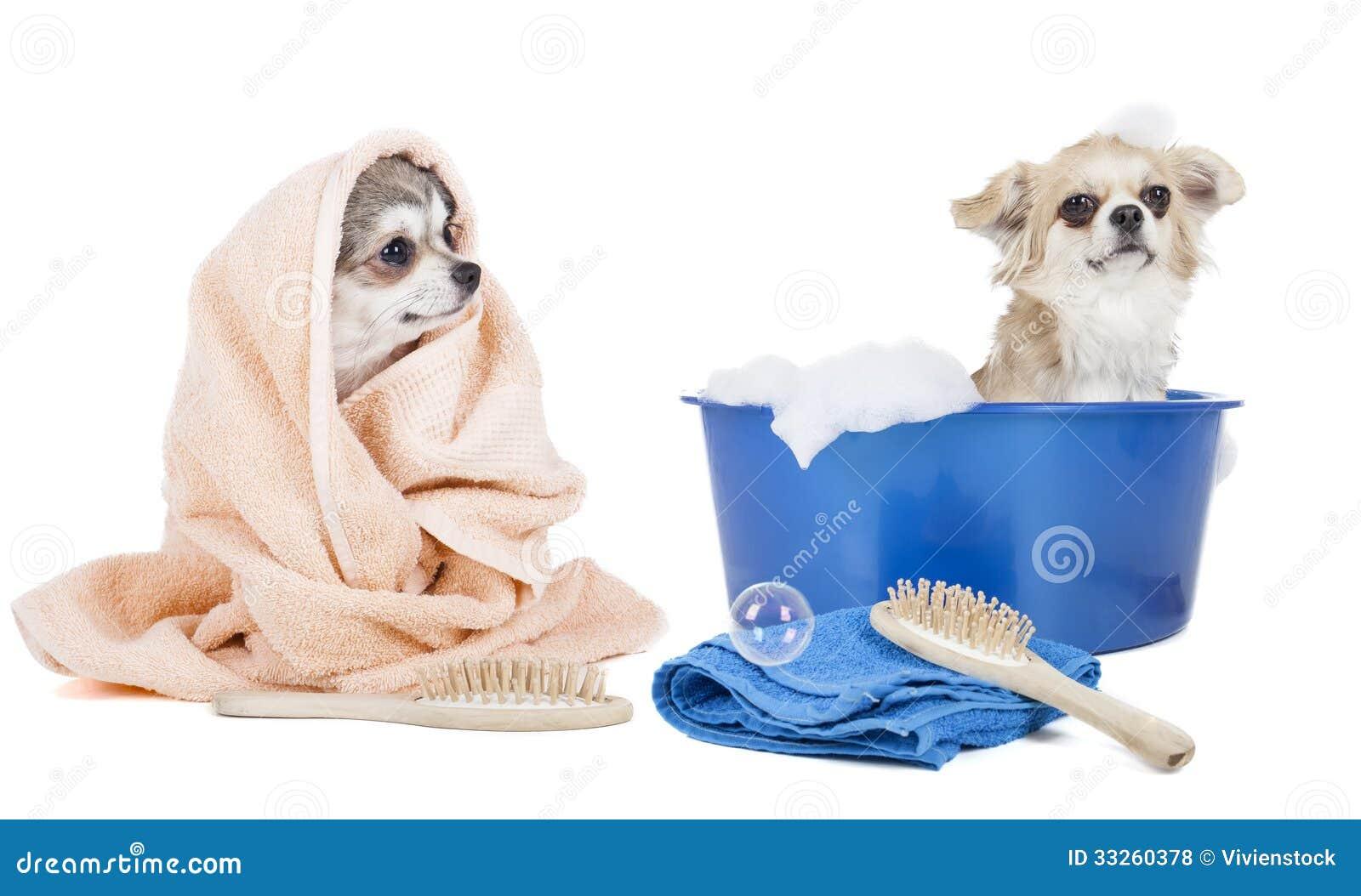 Помойте собак