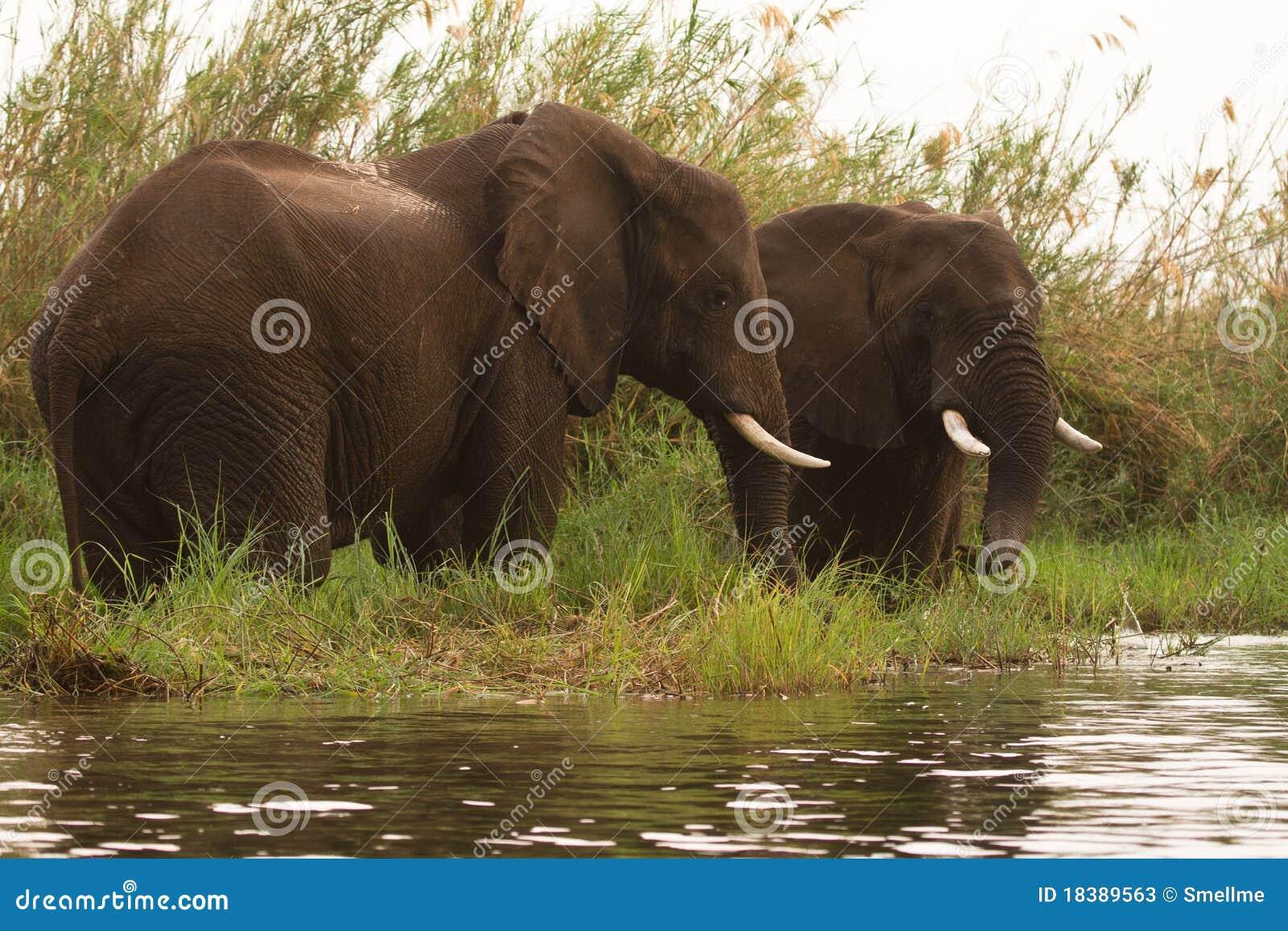 понизьте сафари zambezi