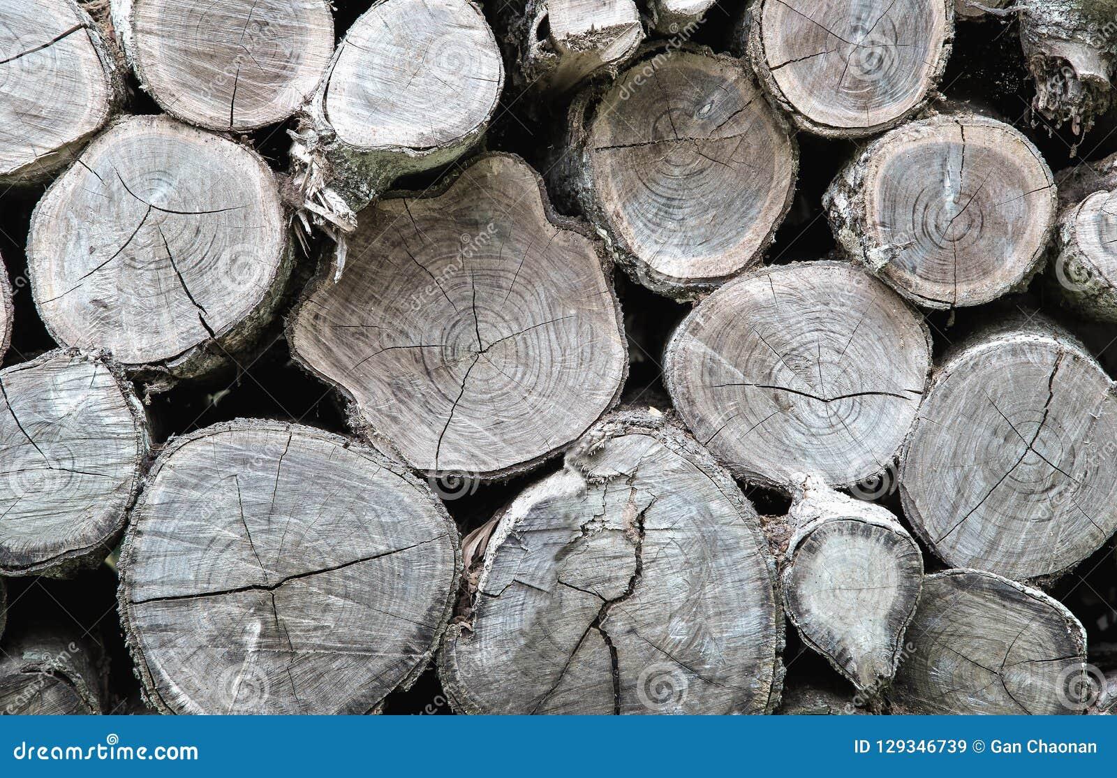 Поперечное сечение предпосылки стволов дерева