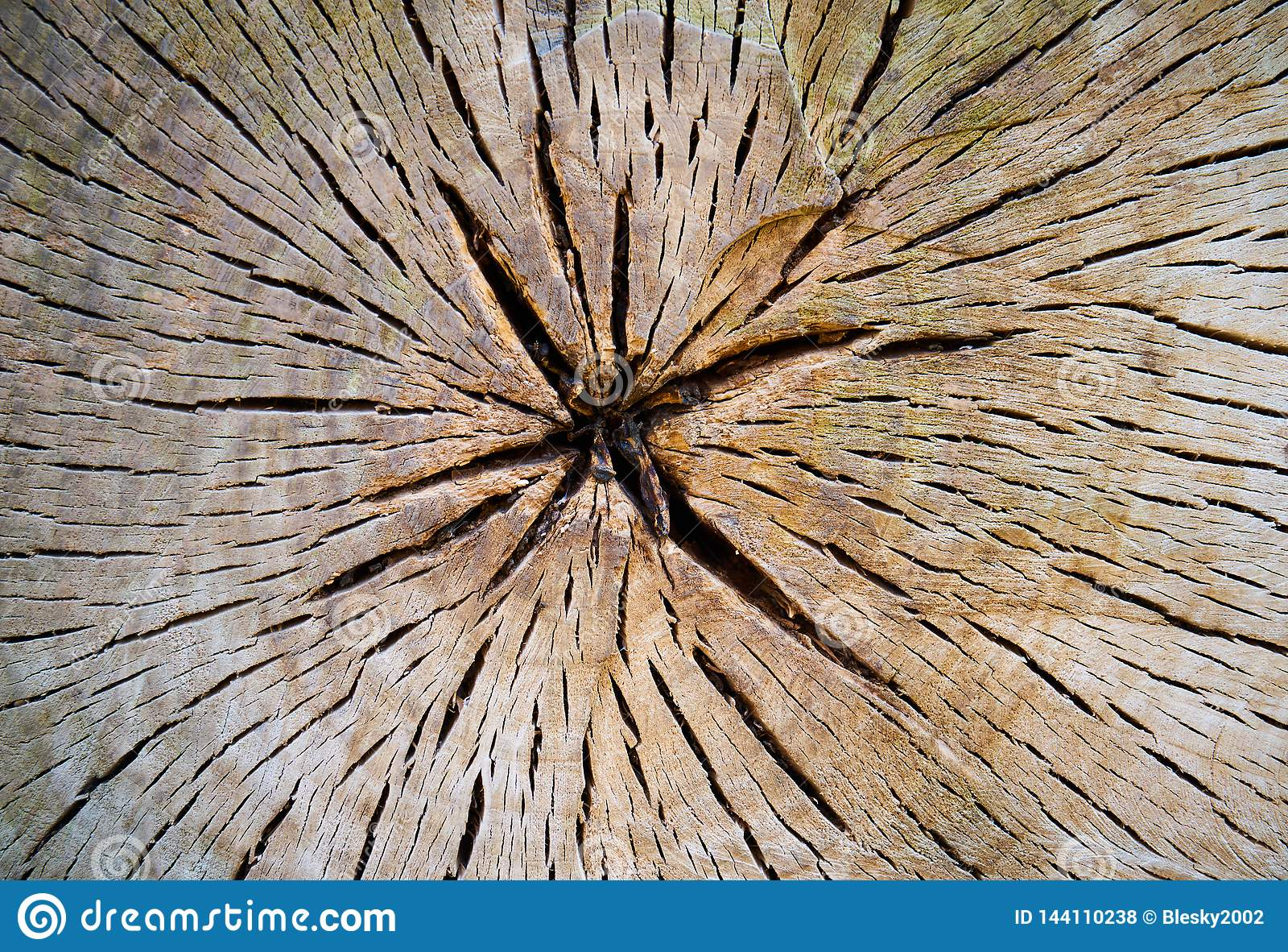 Поперечное сечение ствола дерева