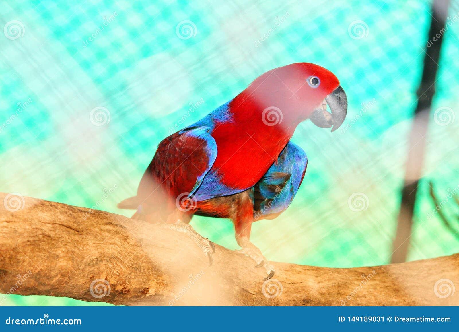 Попугай сидя на ветви