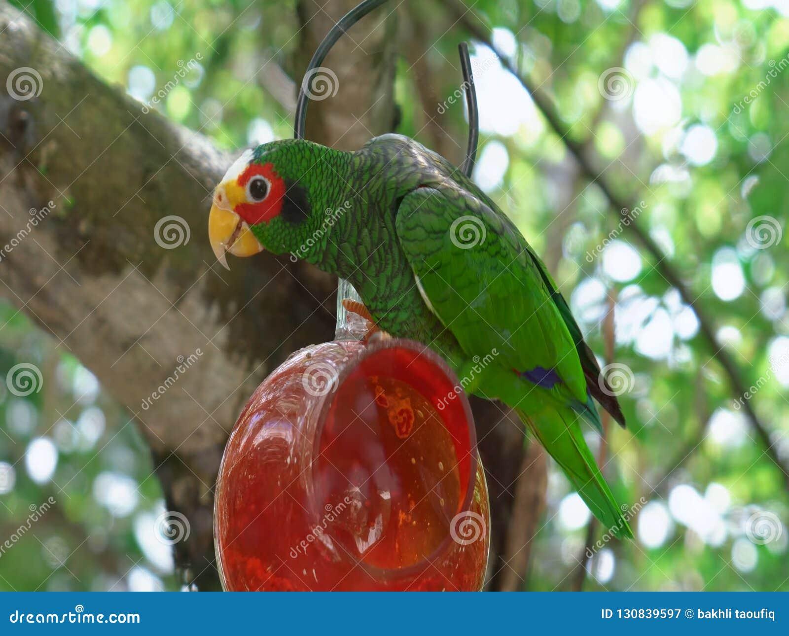 попыгай парка Индонесии ветви птиц bali красивейше