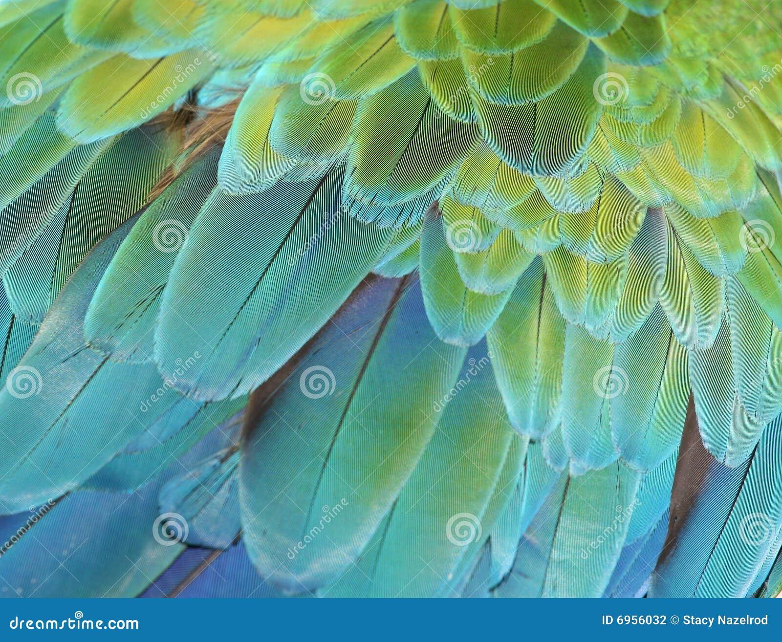 попыгай macaw