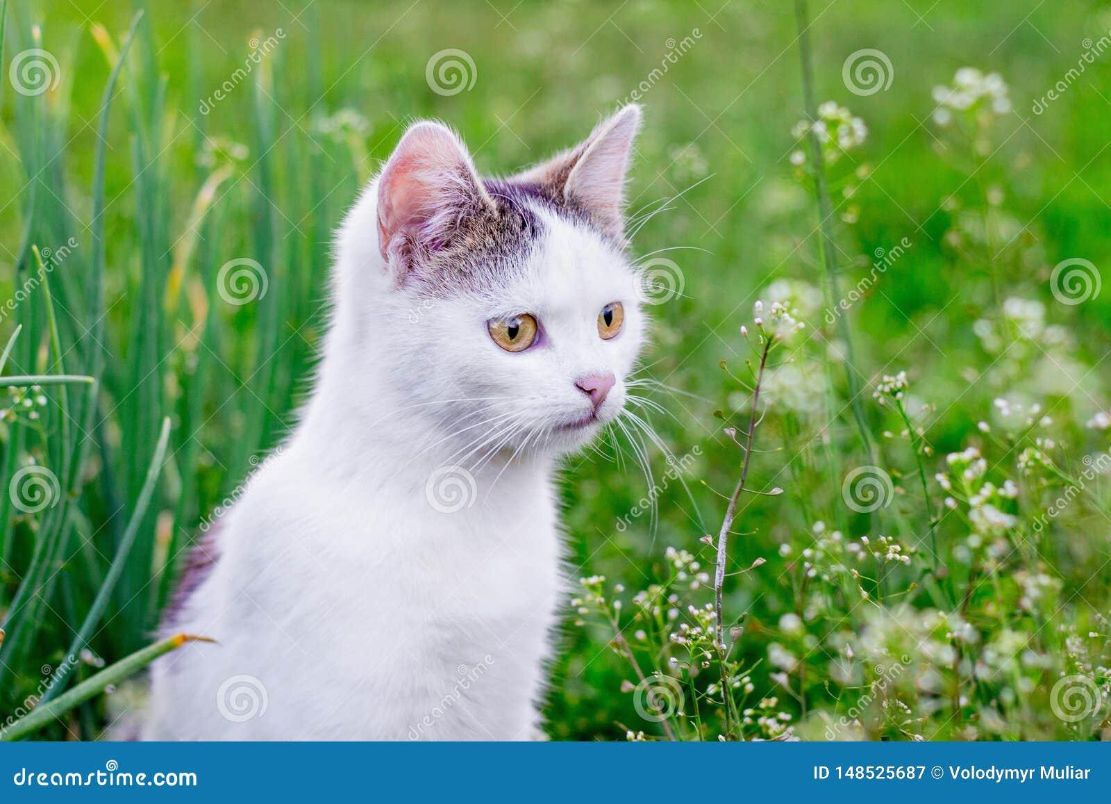 Портрет белого кота против предпосылки зеленой травы в garden_