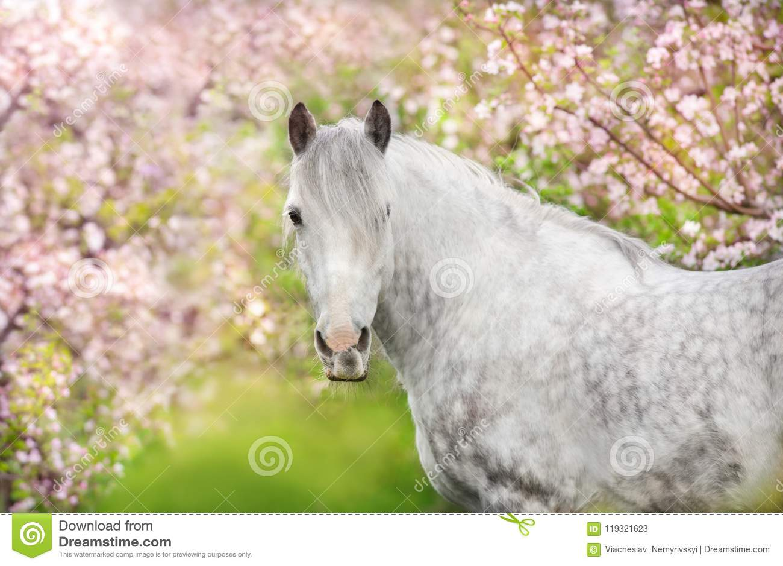 Портрет белой лошади в цветении